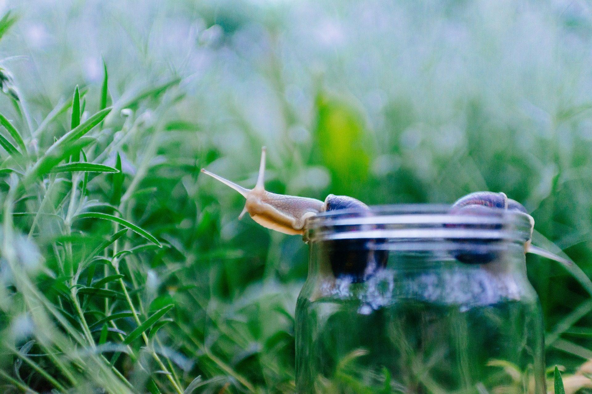 Fondo de pantalla de caracol concha tarro hierba for Caracol de jardin alimentacion