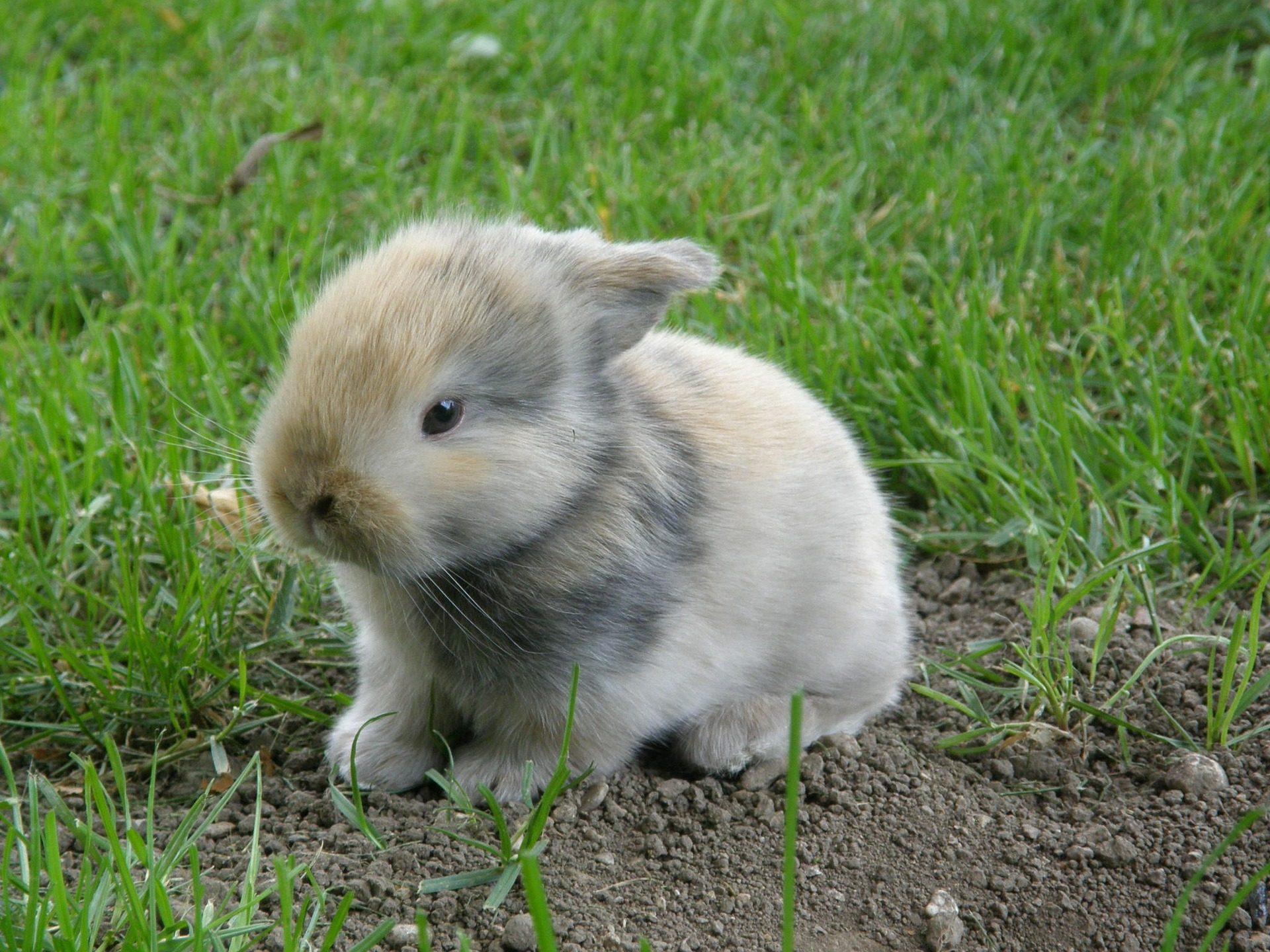 Coniglio, Cría, Lepre, roditore, campo, erba - Sfondi HD - Professor-falken.com