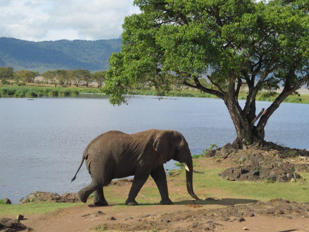 elefante, salvaje, lago, río, árbol, 1708091414