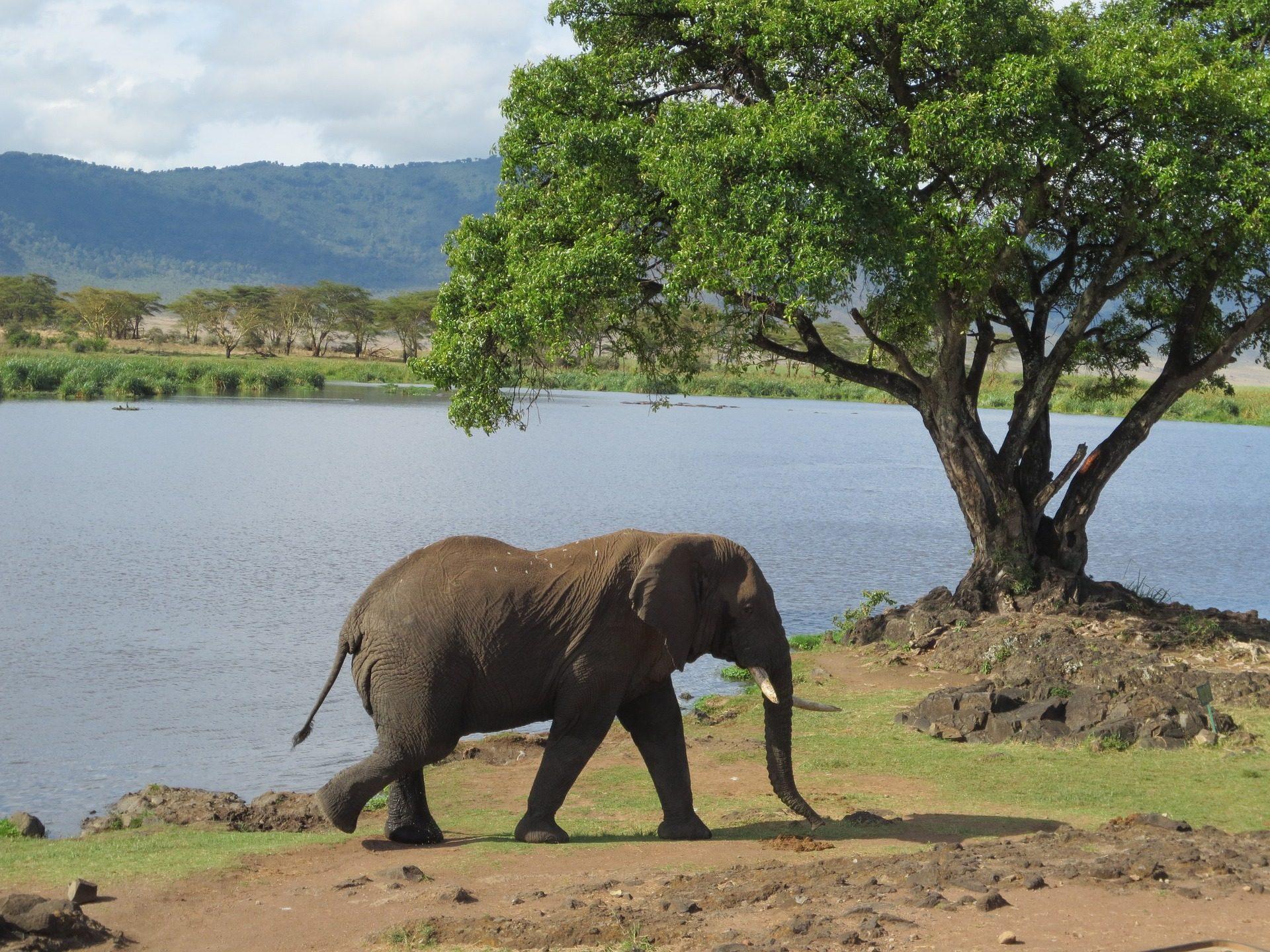Elefant, Wild, Lake, Fluss, Baum - Wallpaper HD - Prof.-falken.com