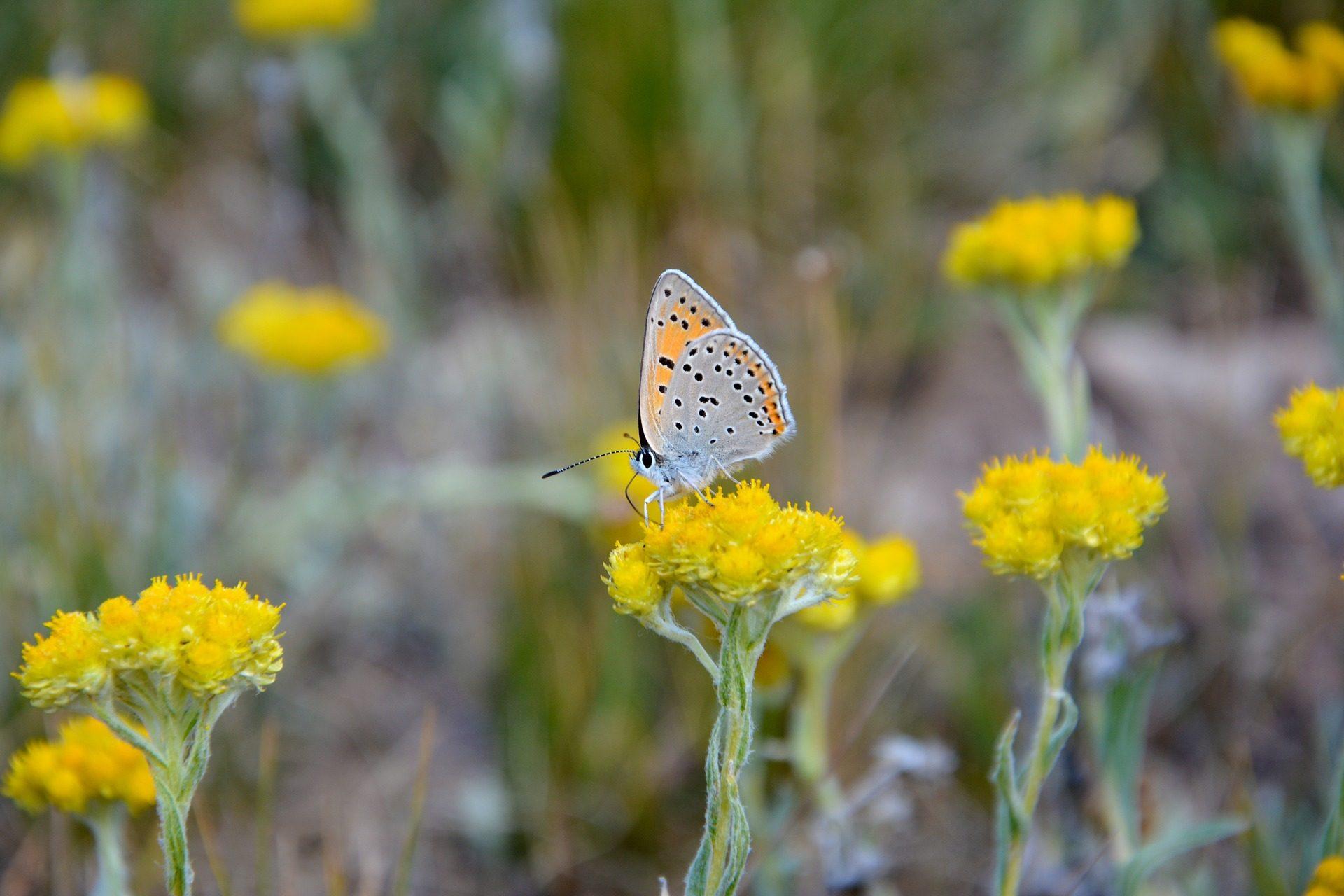 flor, mariposa, insecto, alas, colorido - Fondos de Pantalla HD - professor-falken.com
