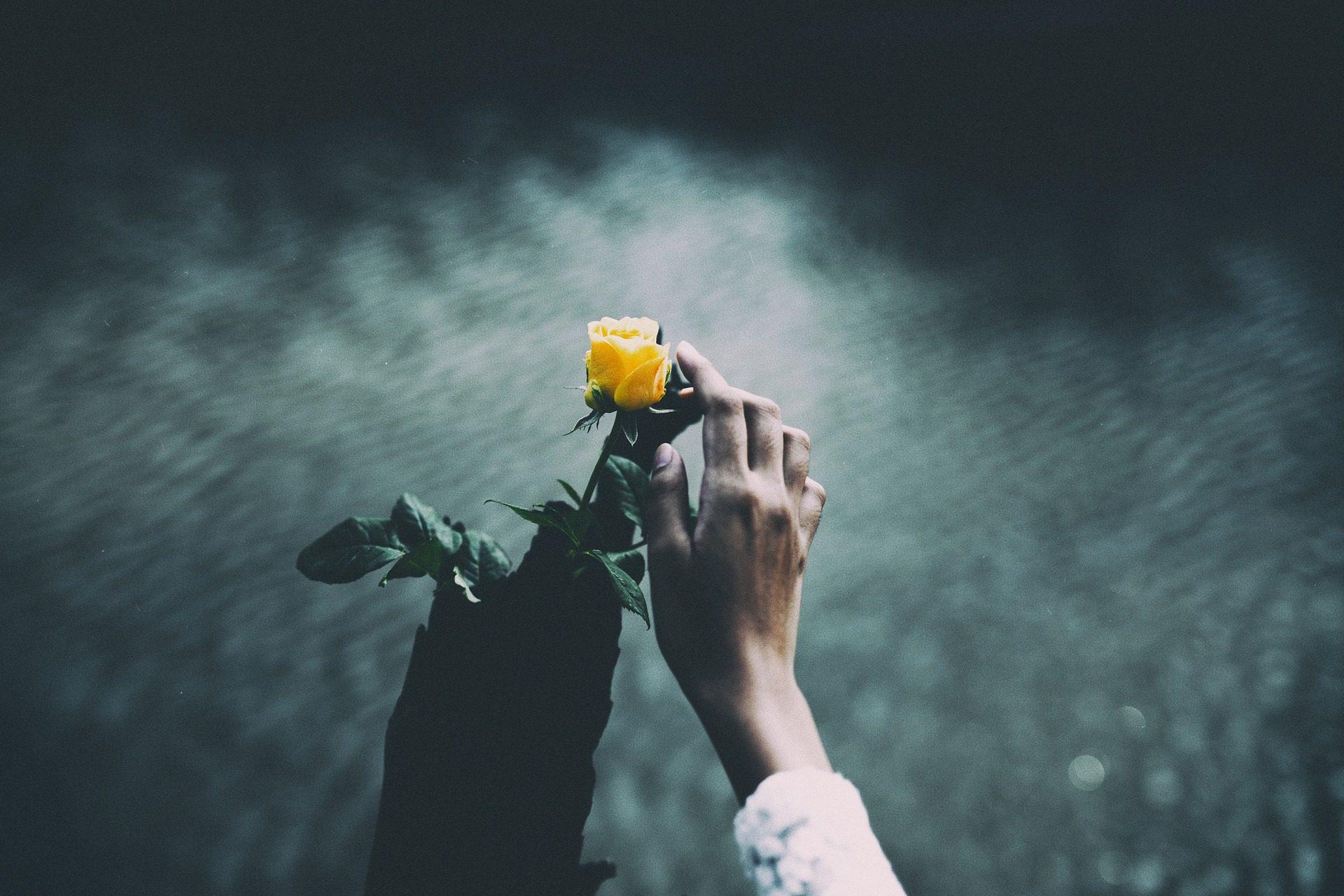 花, 地面层, 花瓣, 手, 爱抚 - 高清壁纸 - 教授-falken.com