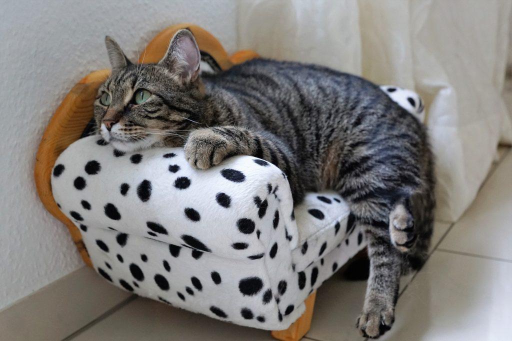 gato, asiento, sillón, sofá, moteado, mascota, 1708201506
