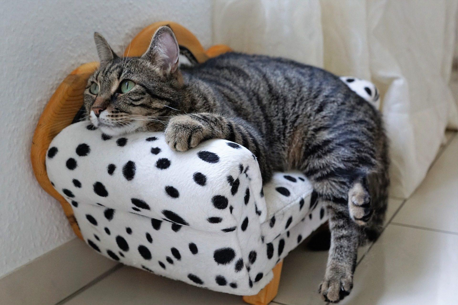 gatto, sedile, sillón, divano, moteado, Animale domestico - Sfondi HD - Professor-falken.com