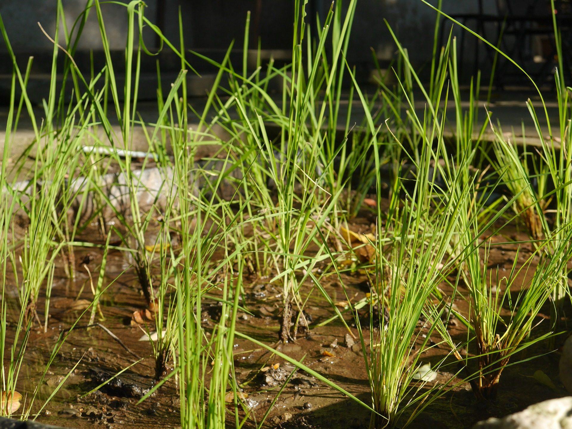 hierba, plantas, brotes, huerto, cultivo - Fondos de Pantalla HD - professor-falken.com