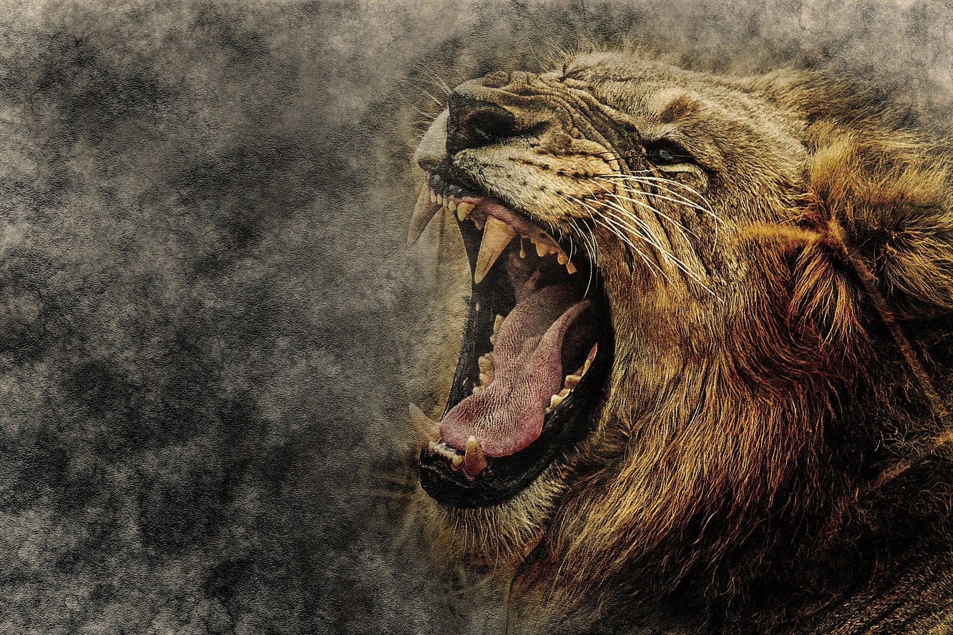 レオン, 餓狼伝説, ネコ科の動物, プレデター, 牙, 轟音 - HD の壁紙 - 教授-falken.com