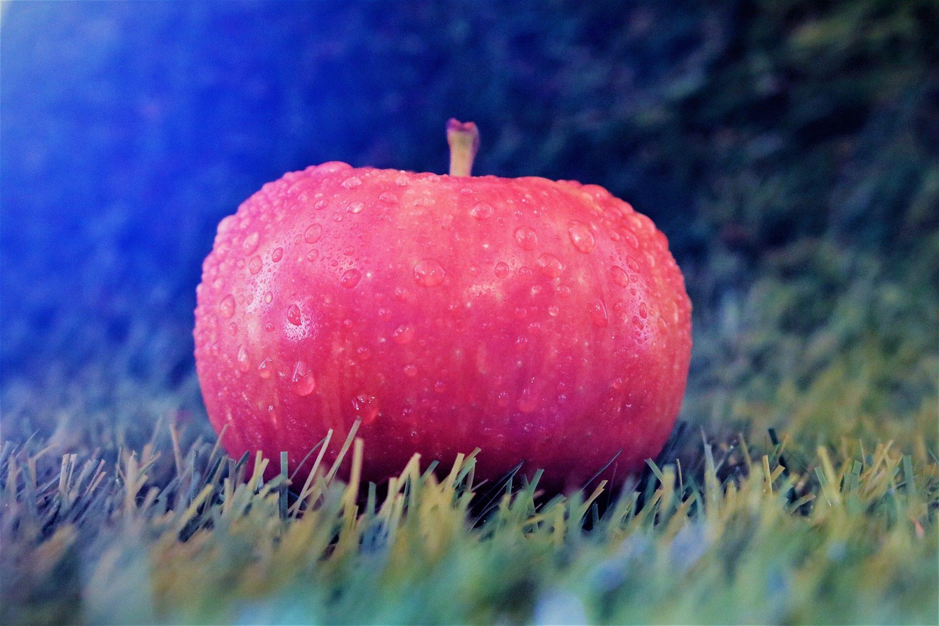 яблоко, капли, воды, трава, газон, яркость - Обои HD - Профессор falken.com