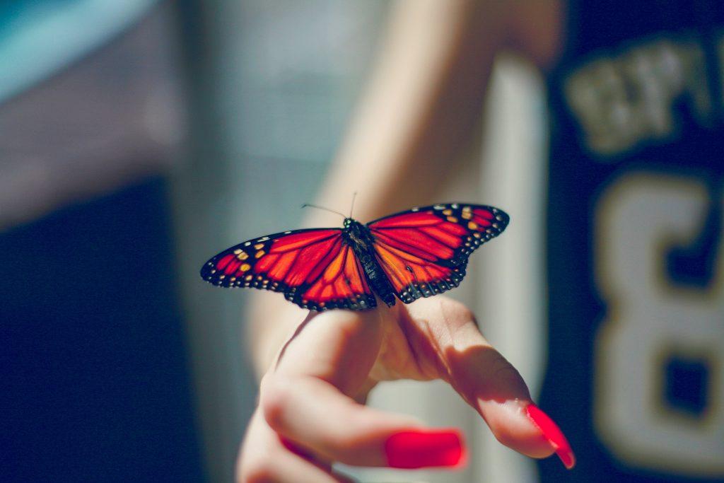 mariposa, colorido, manos, mujer, uñas, 1708152204