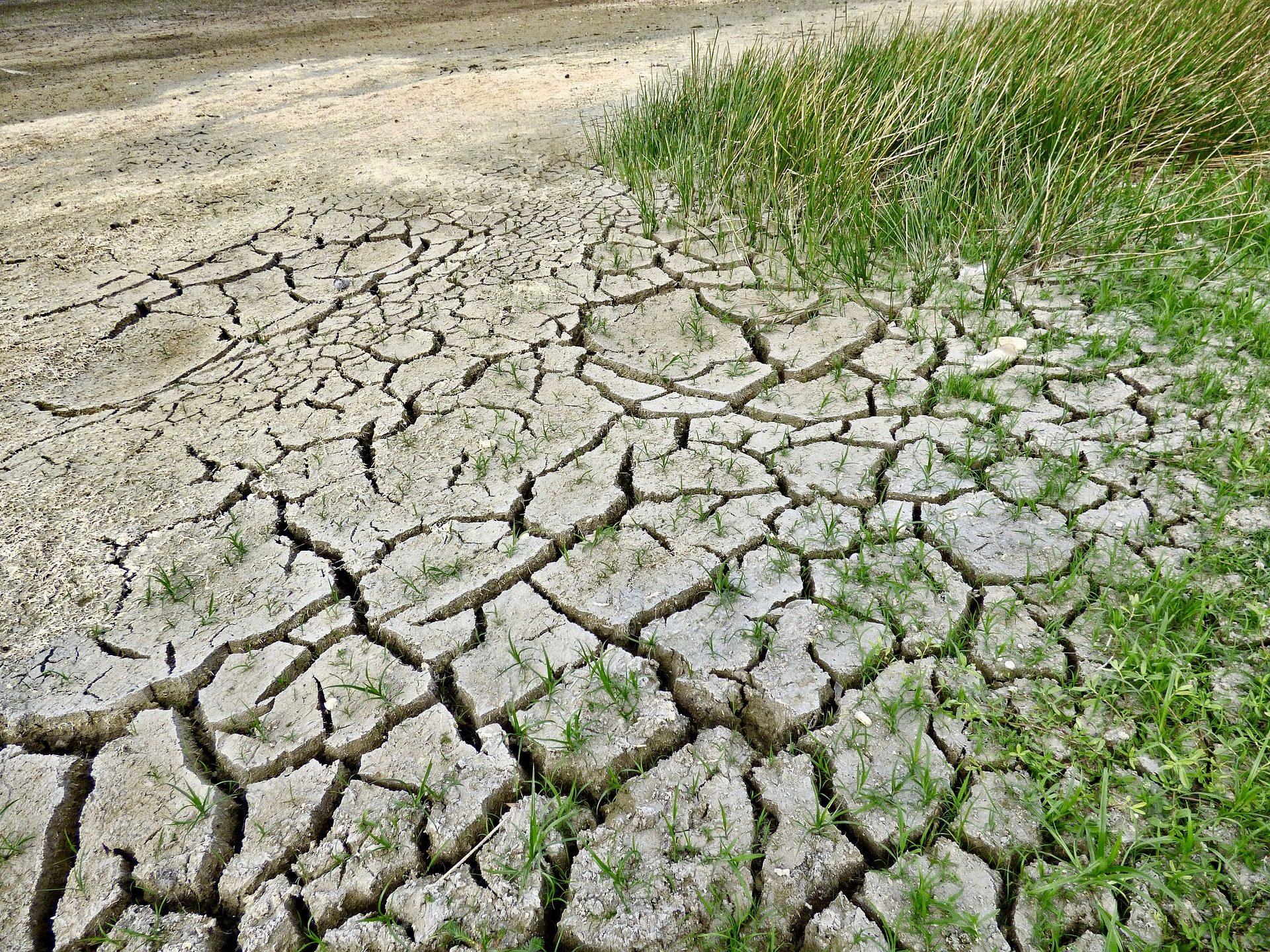 沼泽, 干旱, 短缺, 草, 地球, 裂缝 - 高清壁纸 - 教授-falken.com