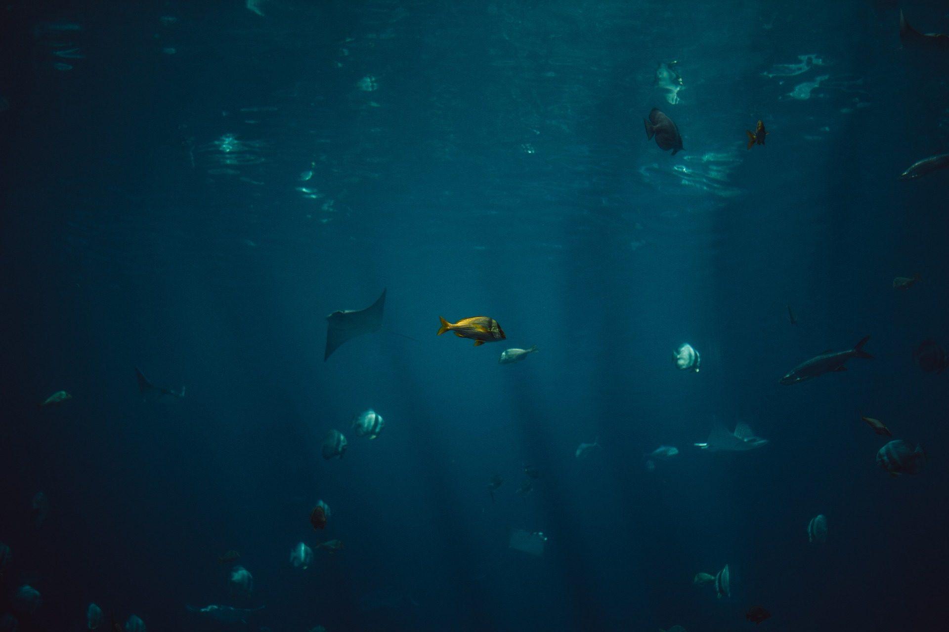 魚, océano, 海, 深さ, 水中 - HD の壁紙 - 教授-falken.com