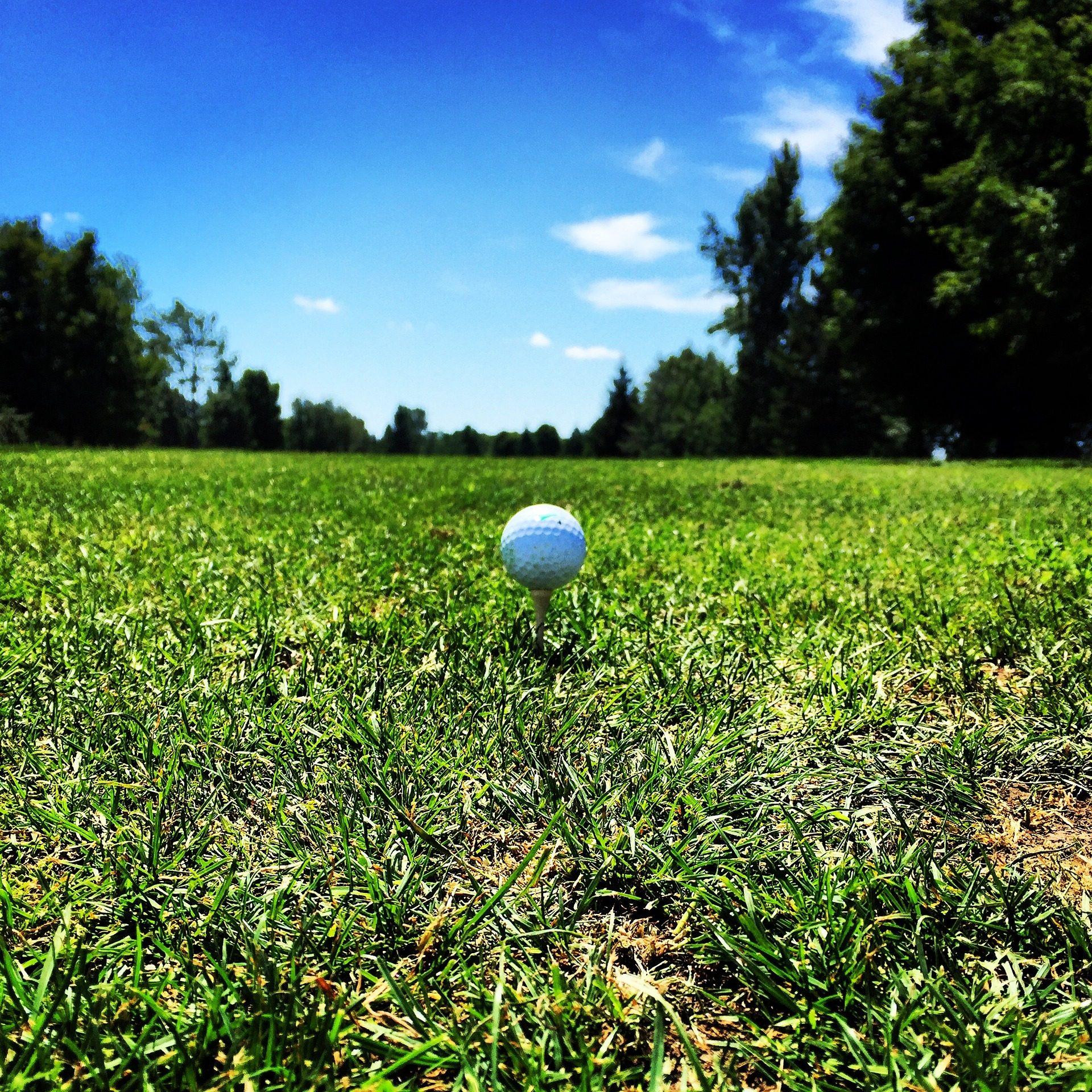 pelota, 球, 字段, 高尔夫, 草坪, 树木, 1708172346