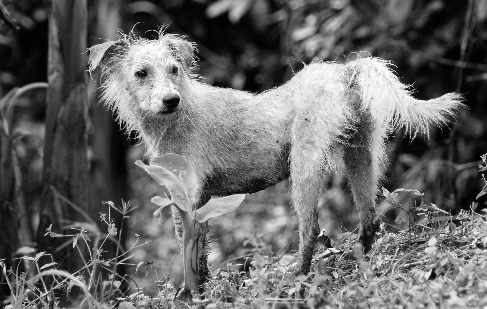 cane, Via, abbandonato, perso, sporco - Sfondi HD - Professor-falken.com
