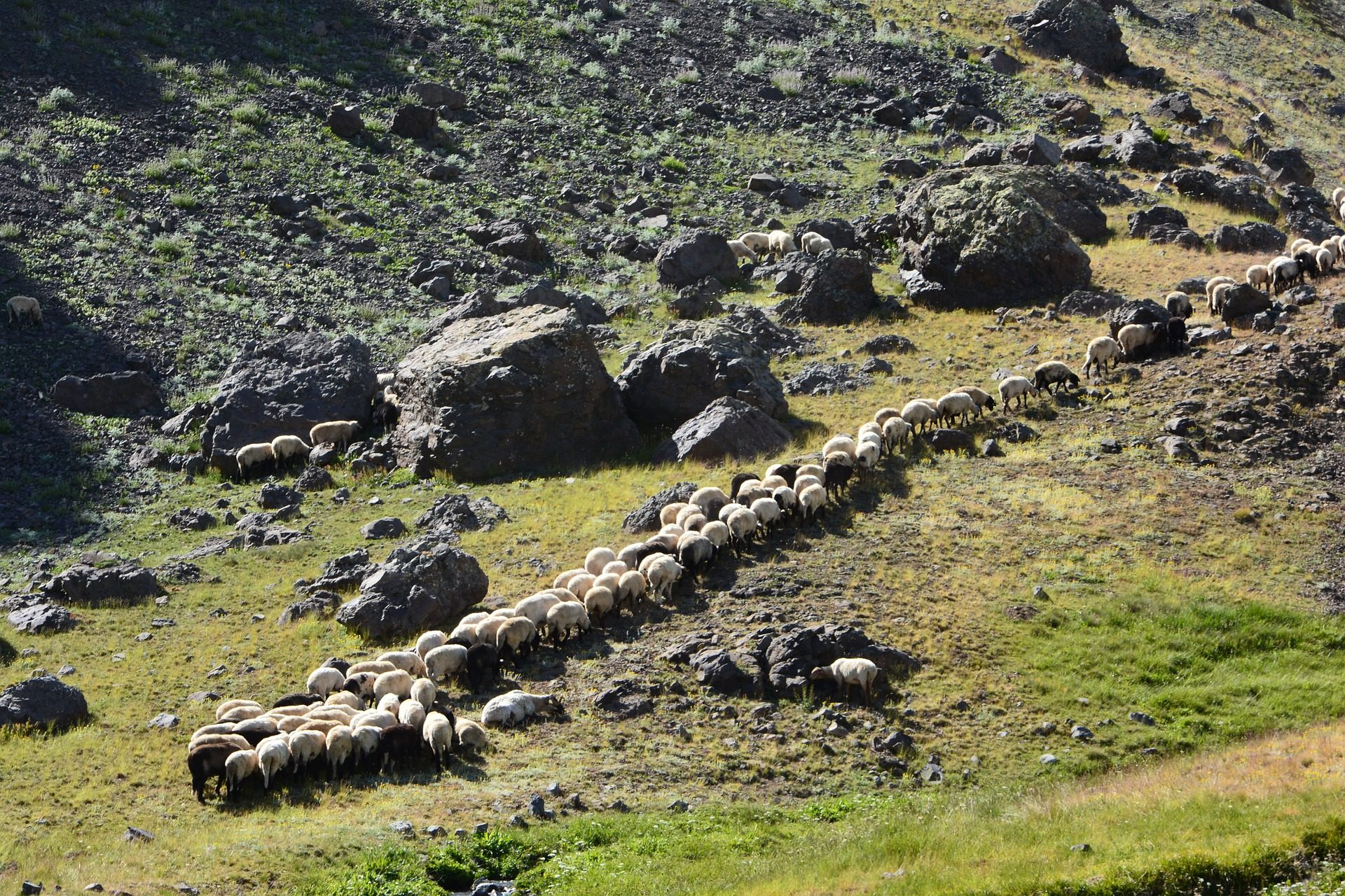Rebanho, ovelhas, gado, pastoreio, campo - Papéis de parede HD - Professor-falken.com