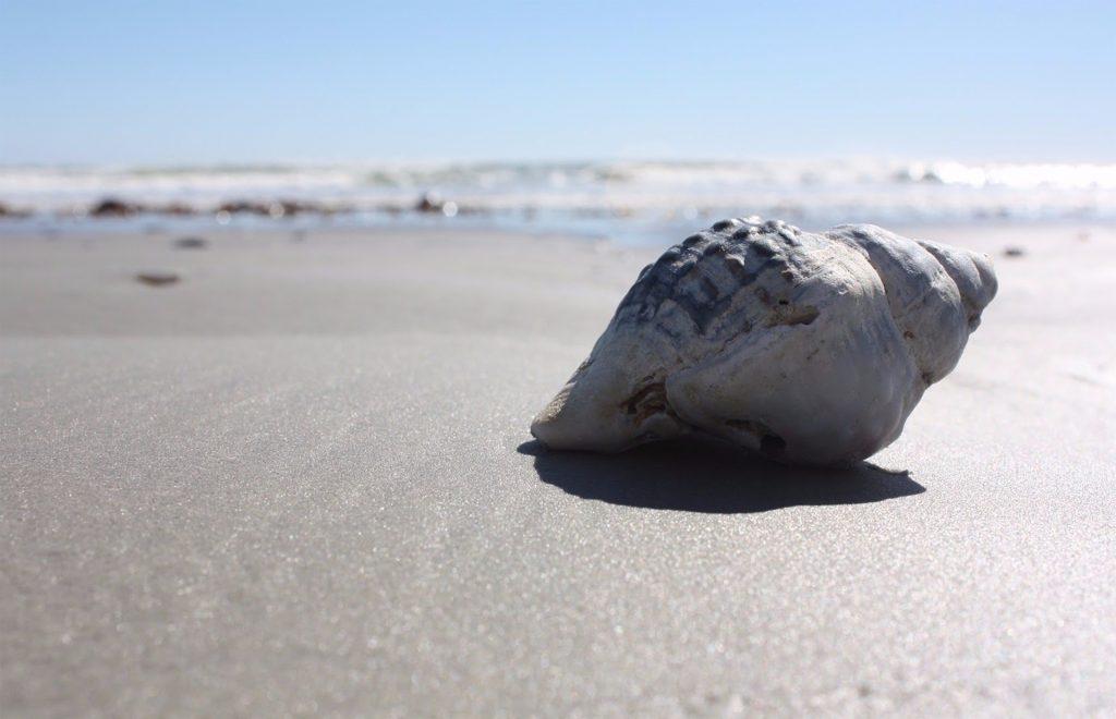 シェル, caracola, 砂, 海, ビーチ, 1709182351