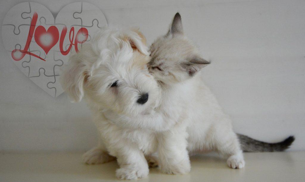 ペット, 犬, 猫, ゲーム, 友情, 愛, 1709200807