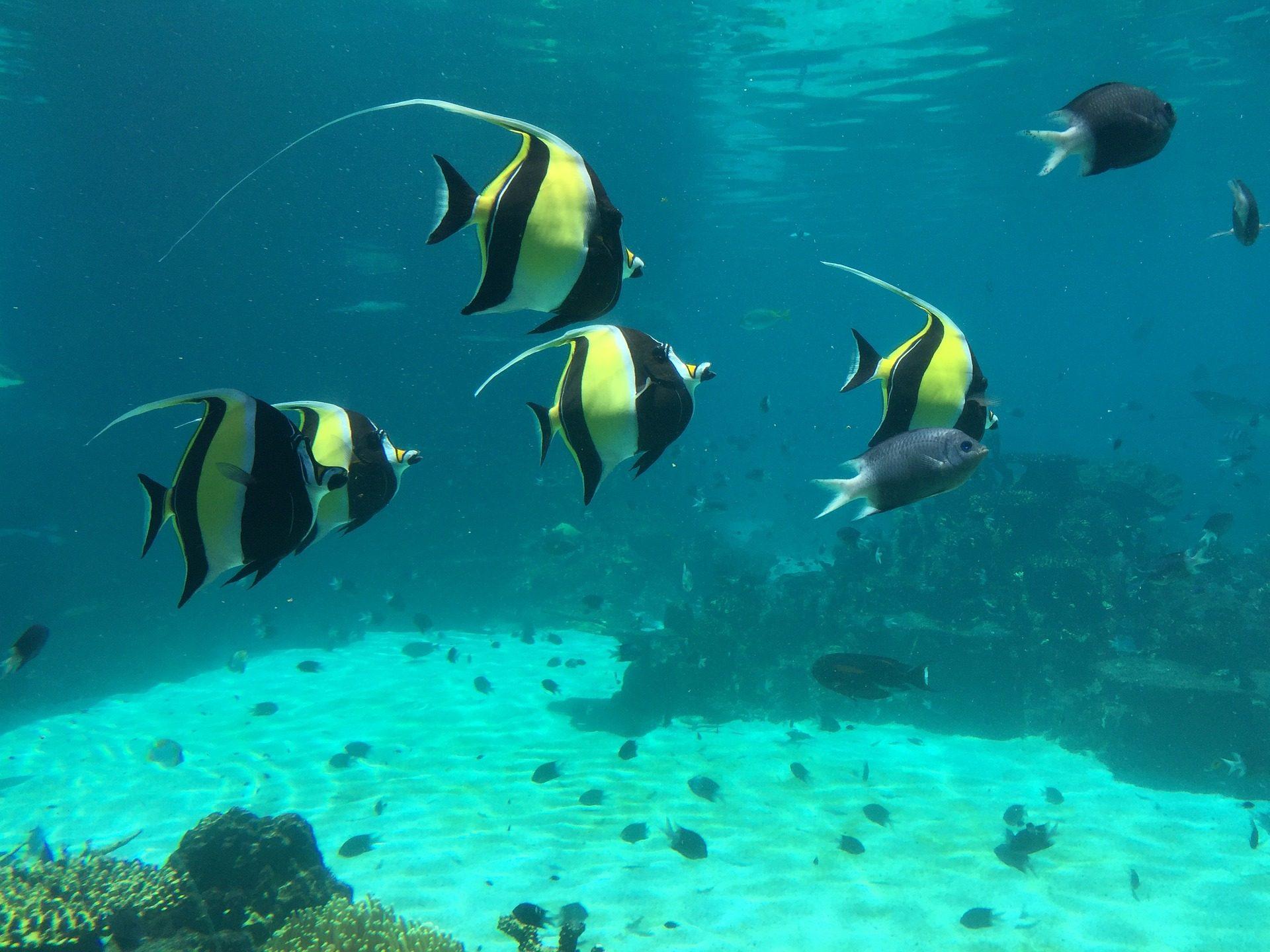 Fondo de pantalla de peces tropicales colorido - Peces tropicales fotos ...