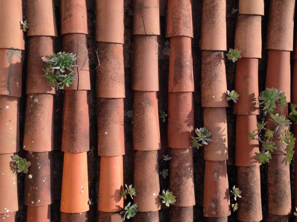 tejas, tejado, plantas, casa, canales, 1709150805