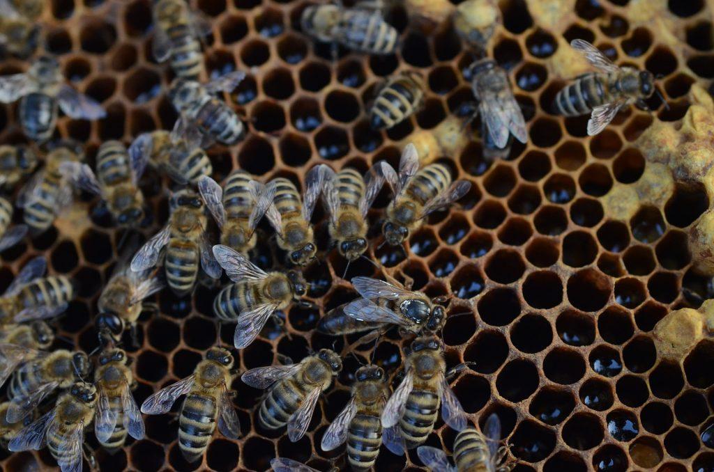abejas, 蜂巢, enjambre, miel, panal, 1710172019