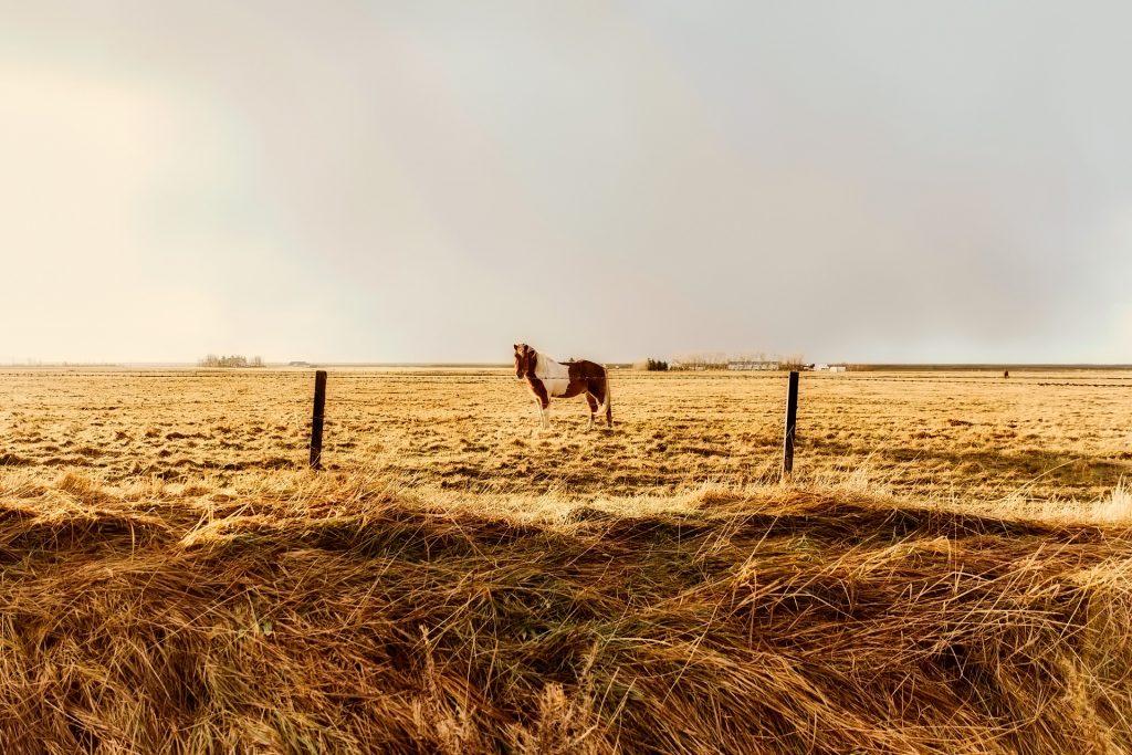 马, 字段, 草, 平原, 独奏, 1710161213