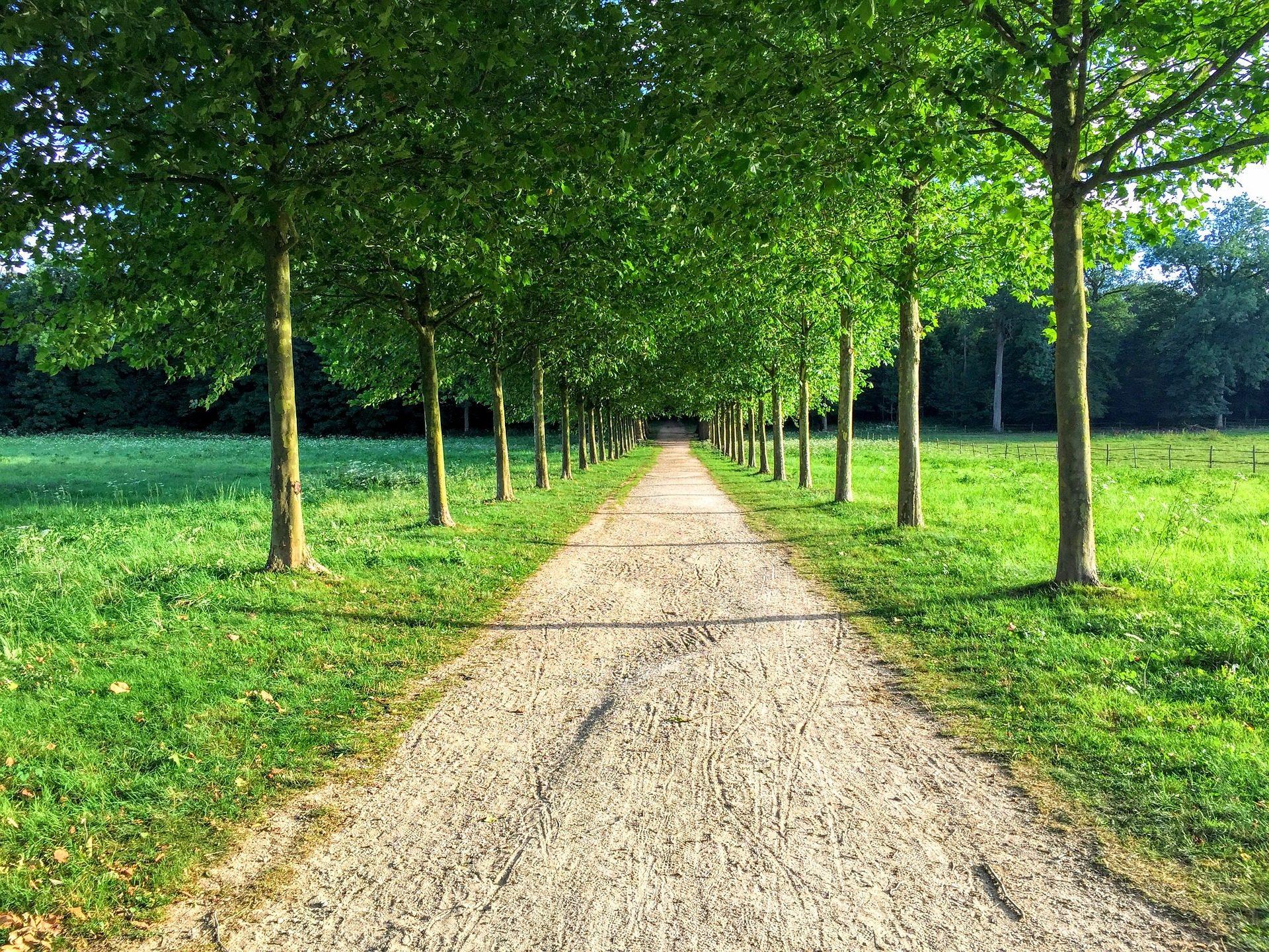 Fondo de pantalla de camino sendero rboles prado for Casa con un camino