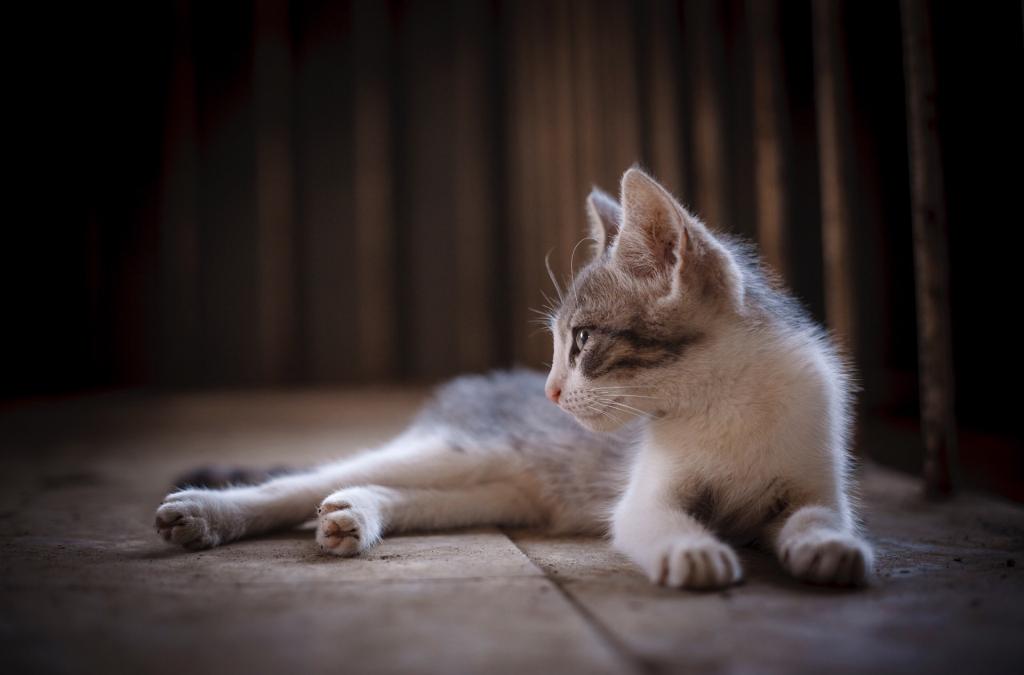 猫, 猫科动物, 休息, 宠物, 毛皮, 1710171650