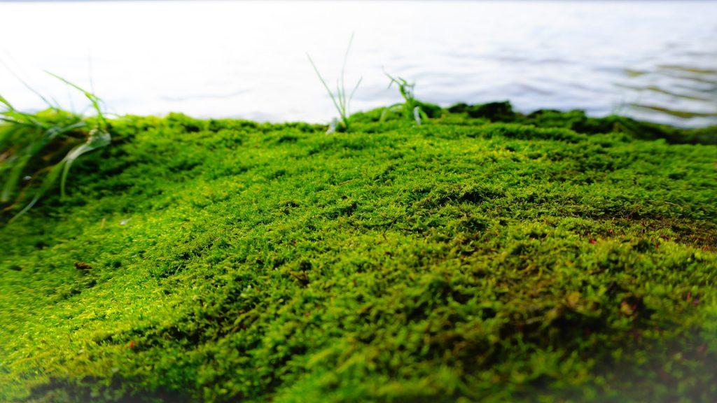 hierba, musgo, pana, humedad, agua, 1710151641