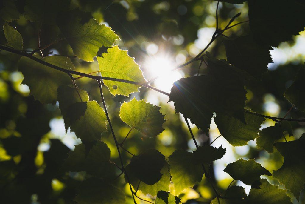 hojas, ramas, árbol, rayos, luz, sol, 1710161500
