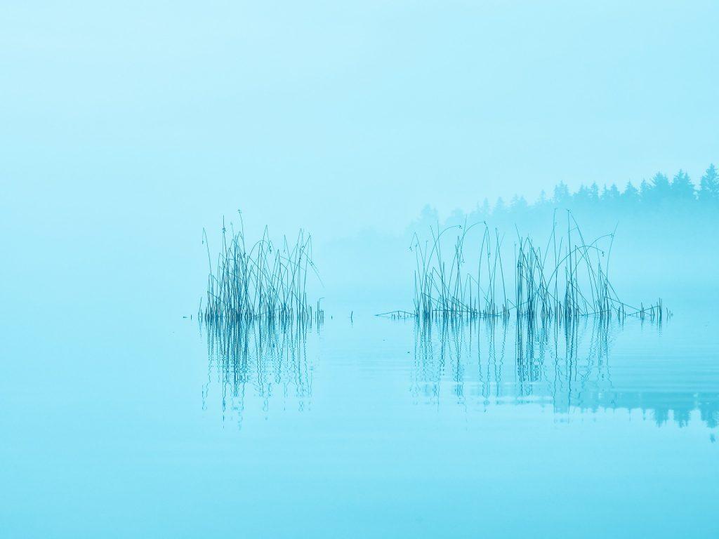 Lake, brouillard, arbres, réflexion, aube, 1710232333