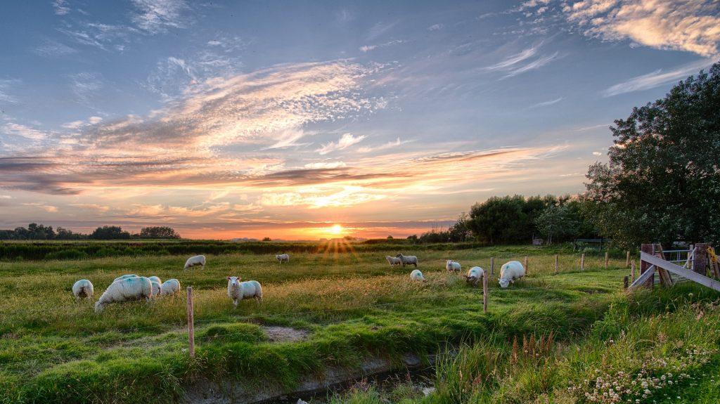 भेड़, झुंड, PRADO, फ़ील्ड, सूर्यास्त, बादल, सूर्य, 1710231432