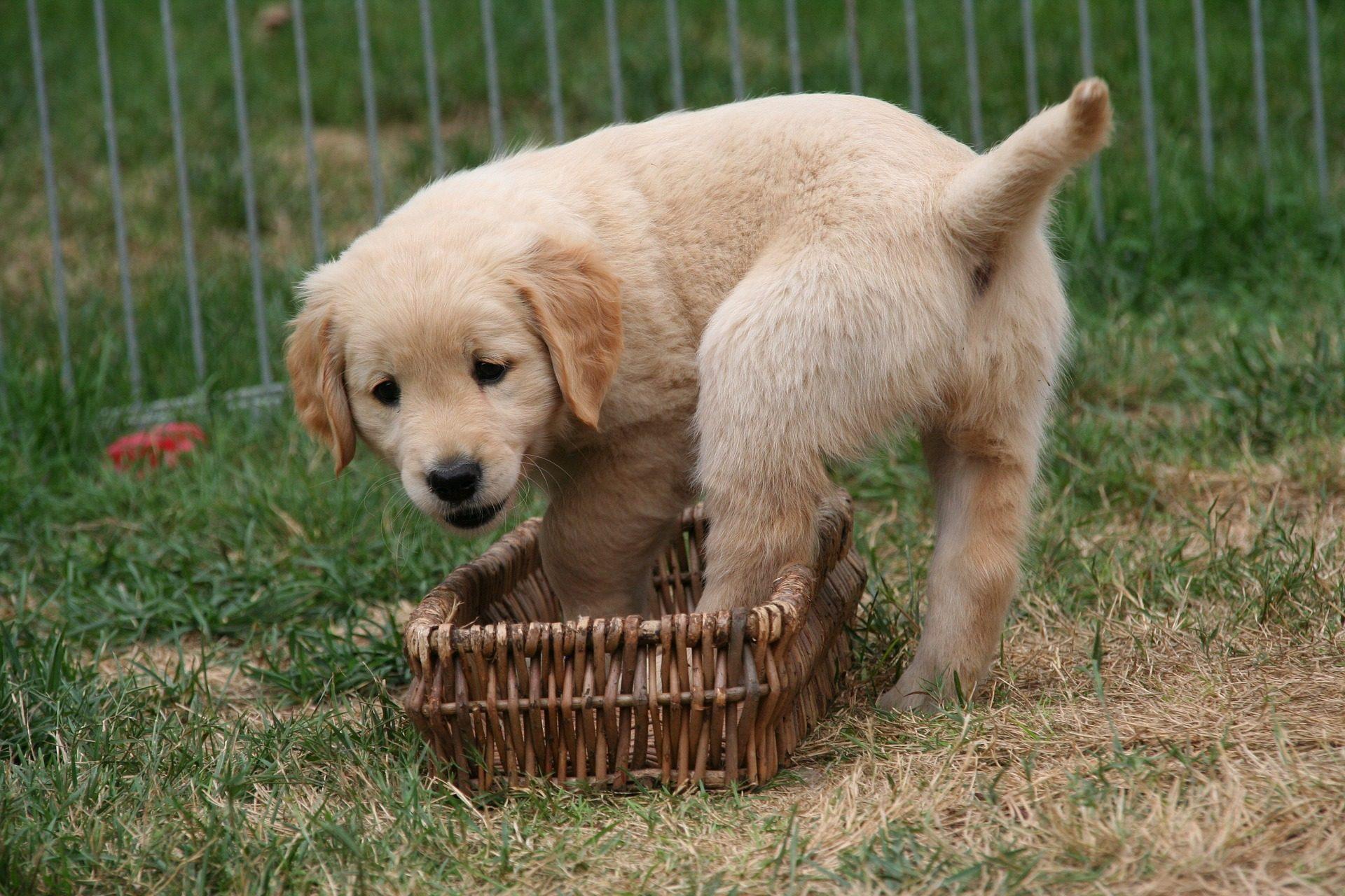 Fondo de pantalla de perro cr a mascota juego jard n - Jardin para perros ...