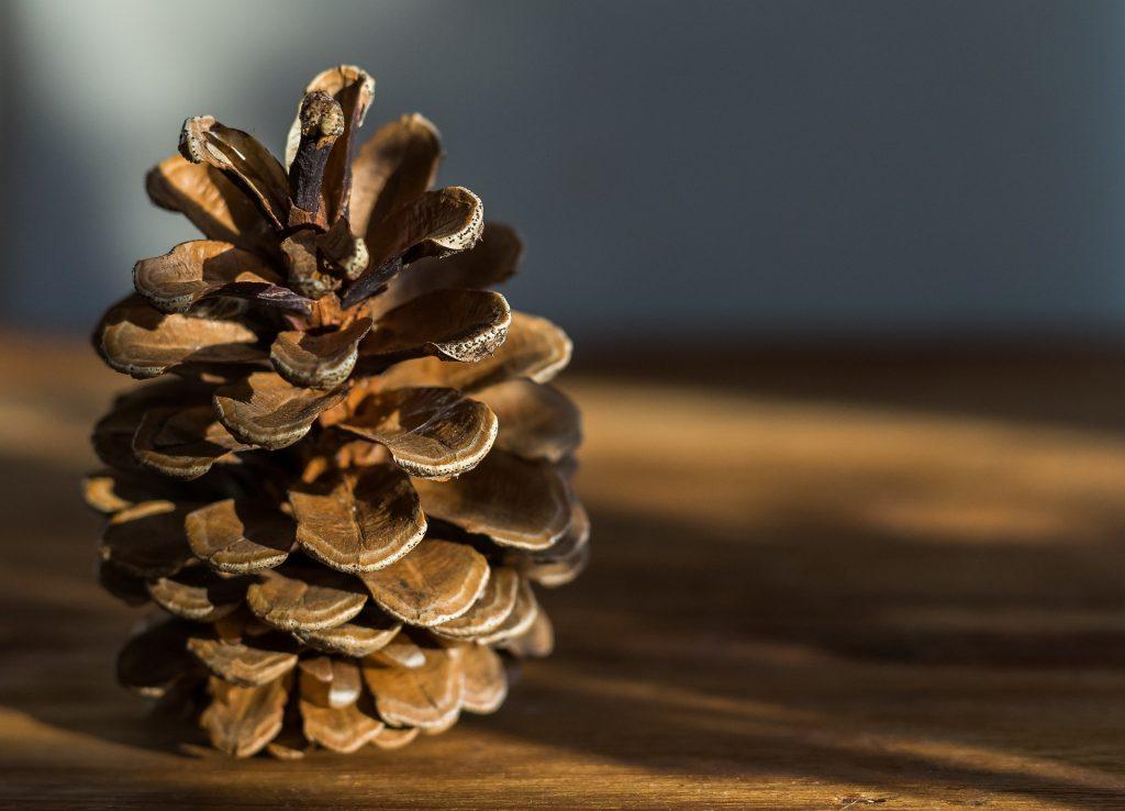 piña, fruto, pino, madera, conífera, 1710222041