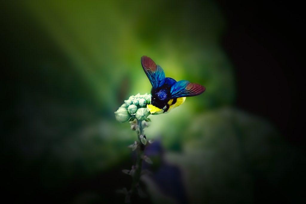 abejorro, flor, piso térreo, inseto, asas, colorido, sobre, 1711200852