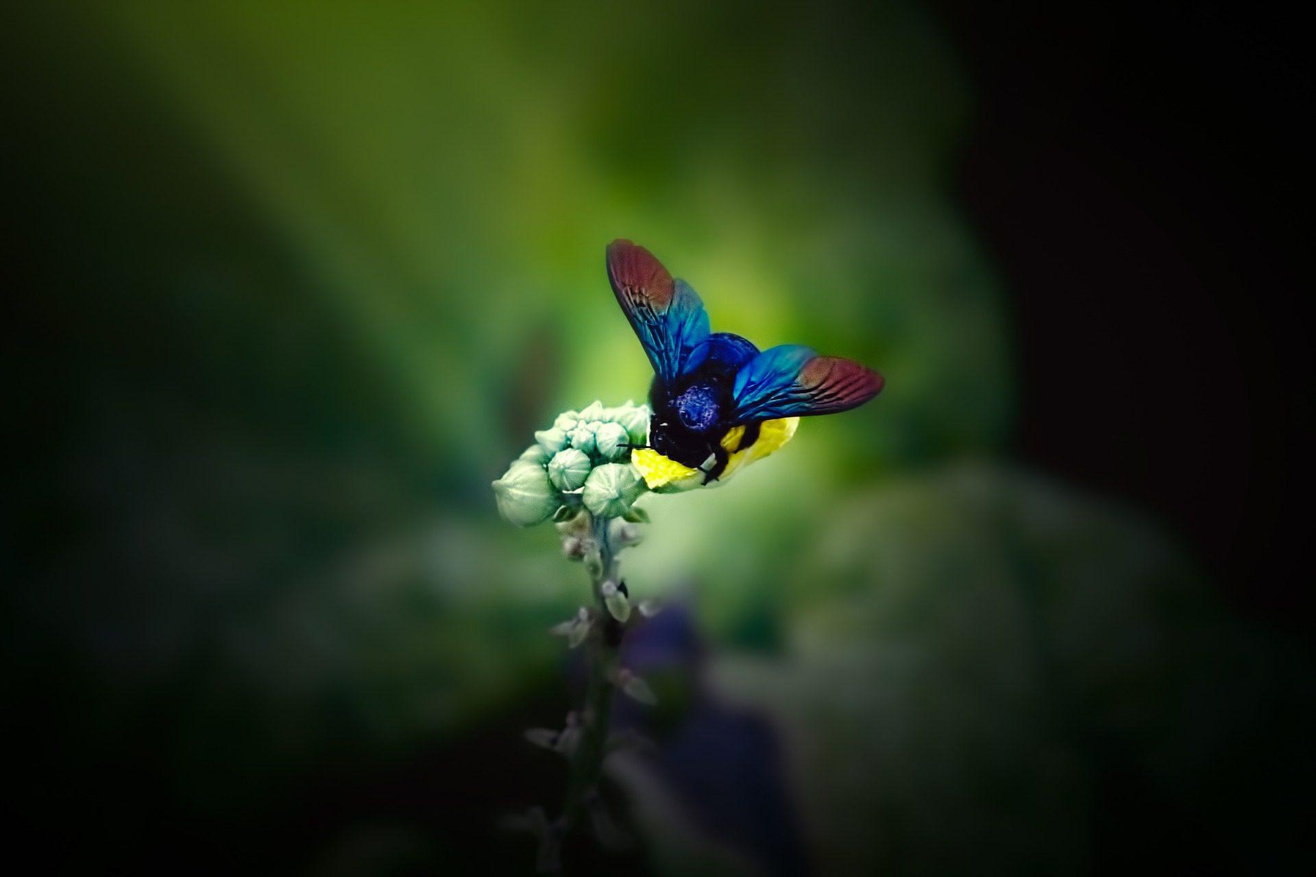 Bombo, fiore, piano terra, insetto, Ali, colorato, circa - Sfondi HD - Professor-falken.com