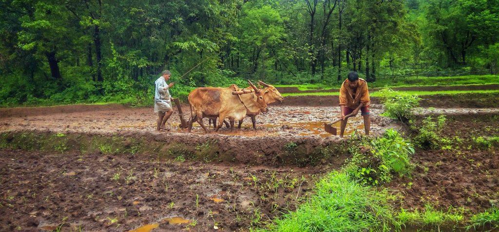 agricultura, cultivo, campo, arado, bueyes, hombres, árboles, 1711181521