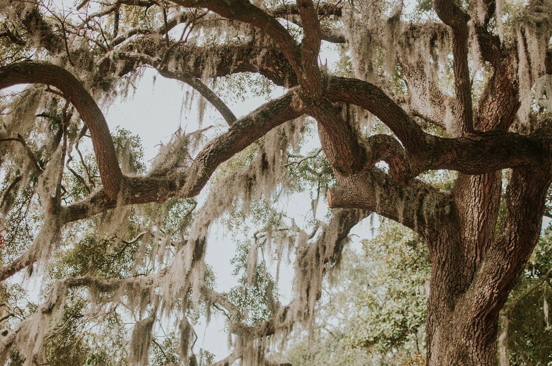 дерево, филиалы, растения, мхи, лес - Обои HD - Профессор falken.com