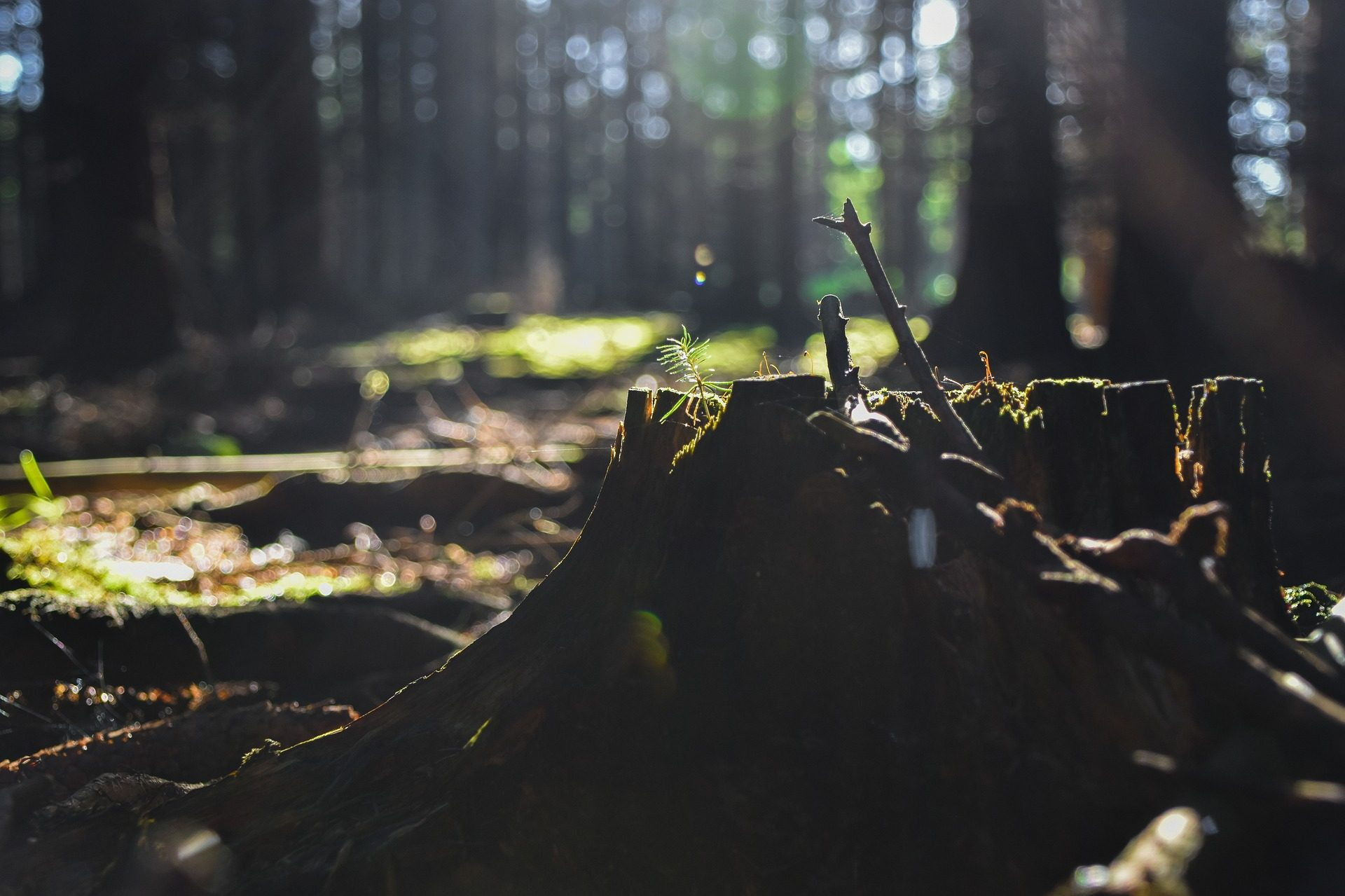 árbol, tronco, abbattimento, foresta, vegetazione - Sfondi HD - Professor-falken.com