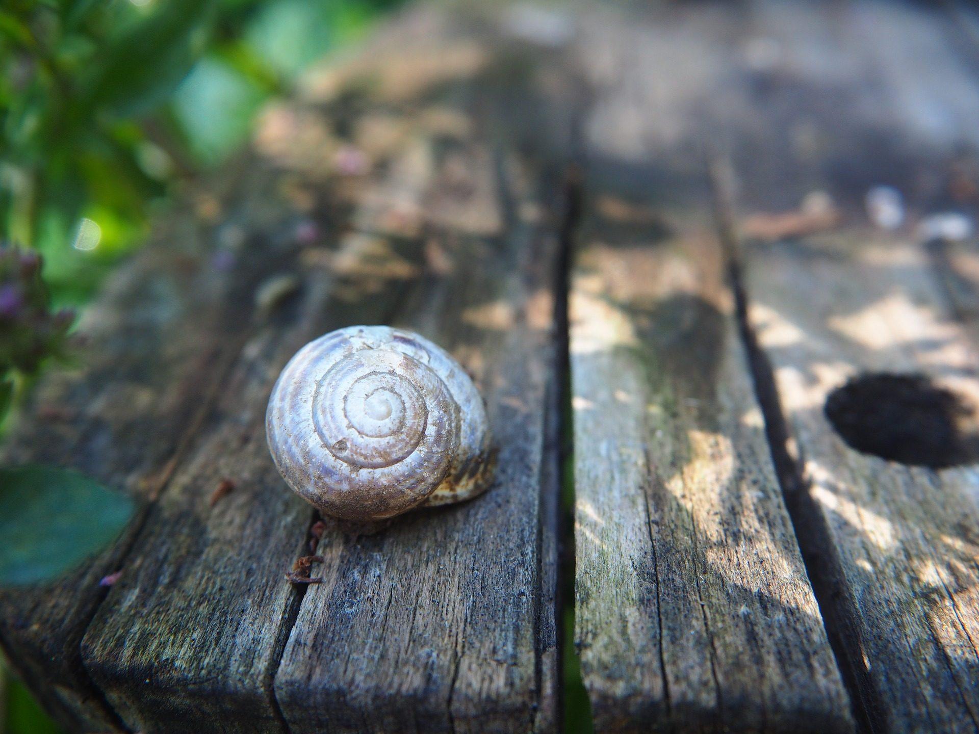 カタツムリ, シェル, 木材, テーブル, ガーデン, 植物 - HD の壁紙 - 教授-falken.com