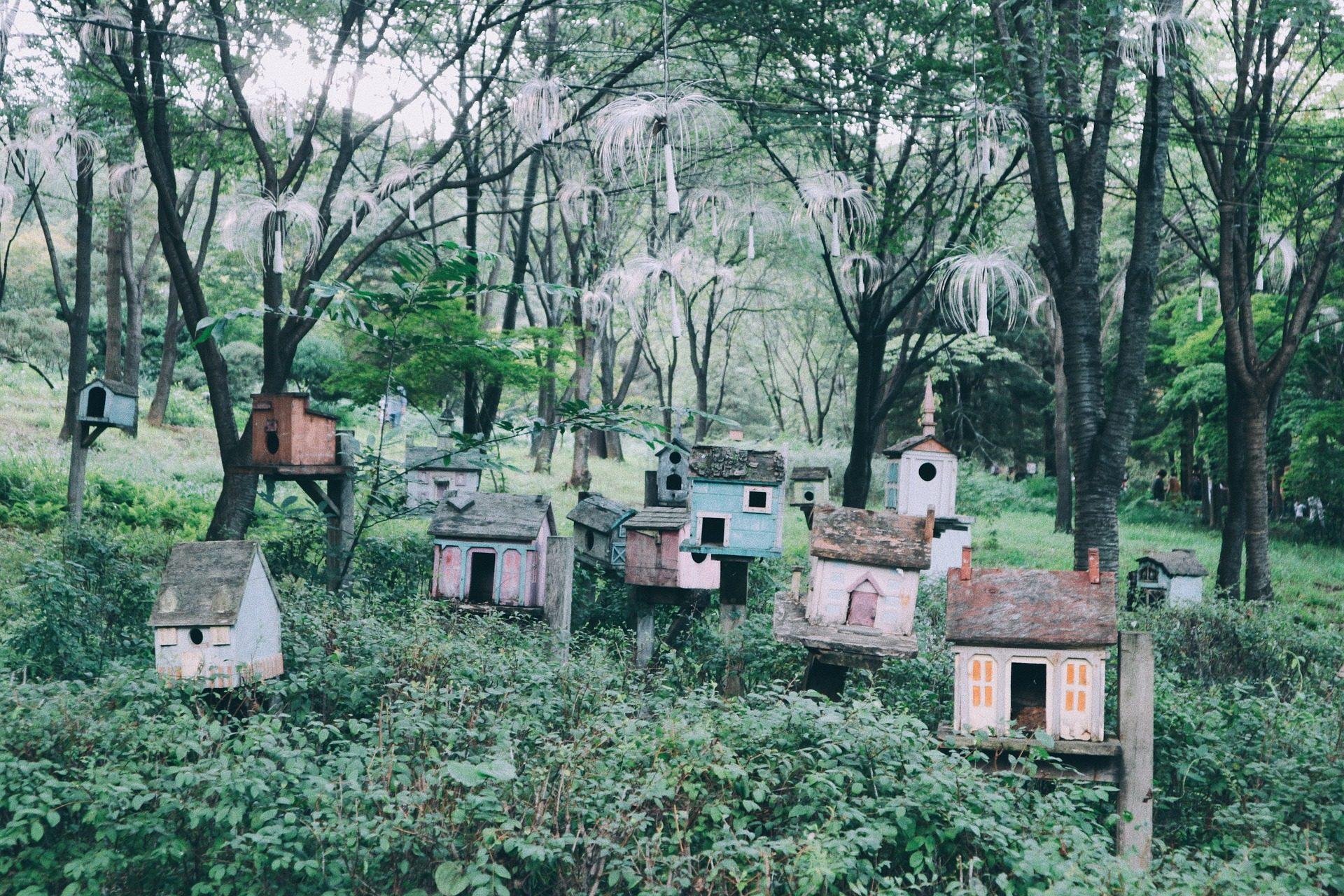 房屋, 鸟类, 巢, 树木, 森林 - 高清壁纸 - 教授-falken.com