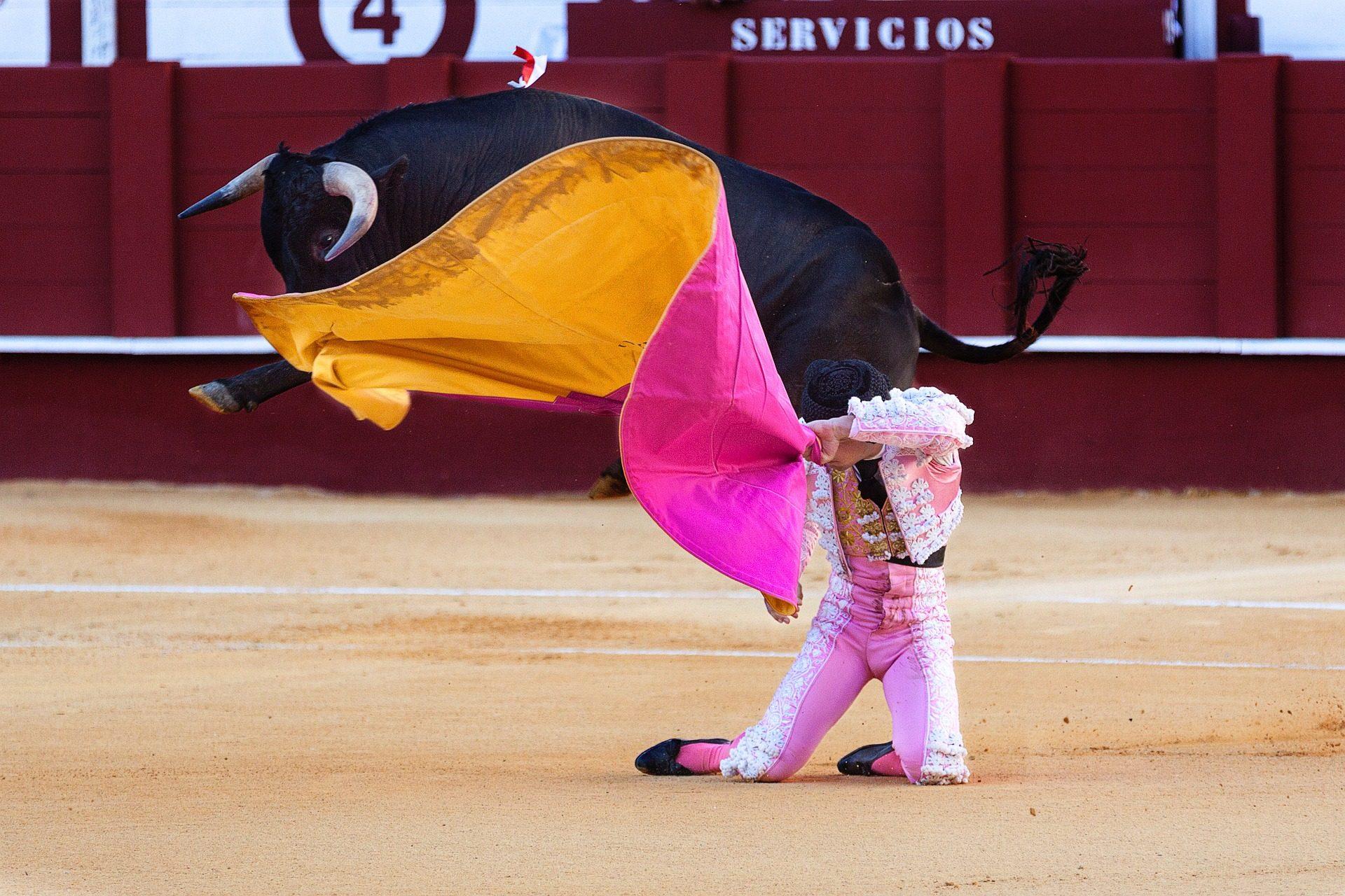 Коррида, Торо, Тореро, Празднование, костюм, фары, Испания - Обои HD - Профессор falken.com
