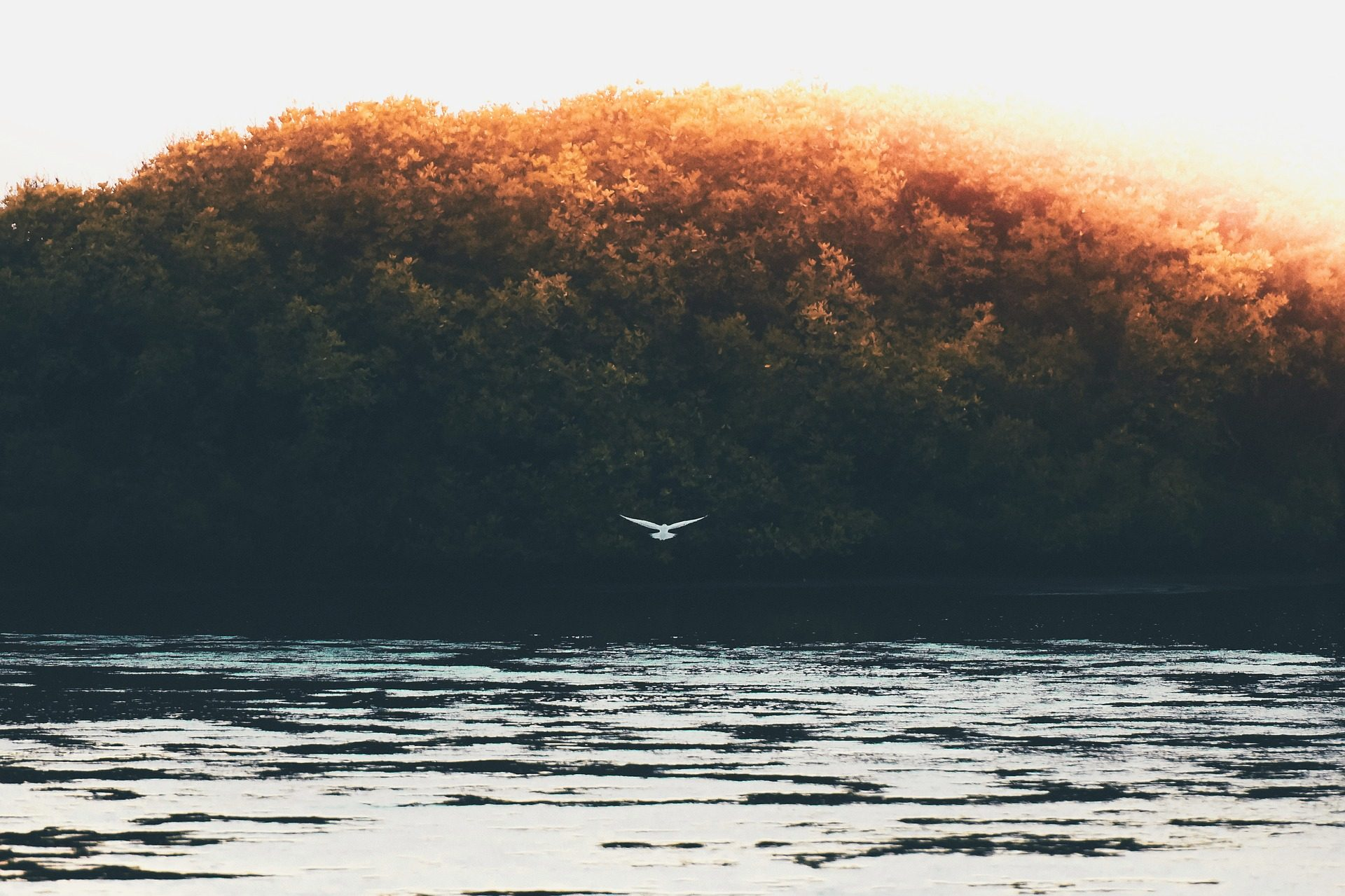 Lago, Rio, árvores, Pássaro, Ave, voo - Papéis de parede HD - Professor-falken.com