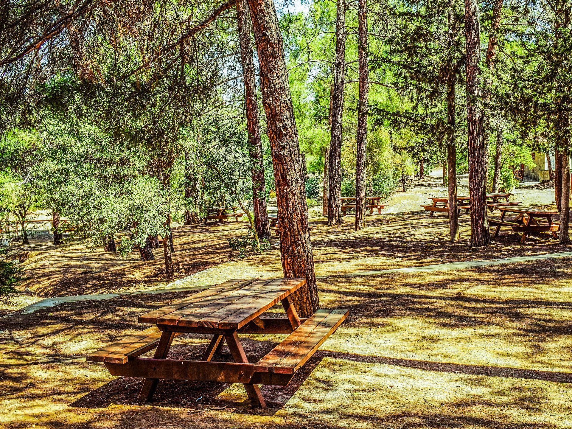 merendero, campo, bosque, recreo, mesas, bancos, árboles - Fondos de Pantalla HD - professor-falken.com