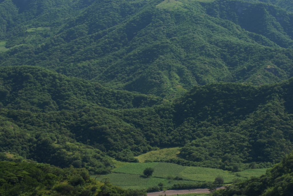 montañas, as pistas, vegetación, árvores, Tlapa de comonfort, México, 1711191450