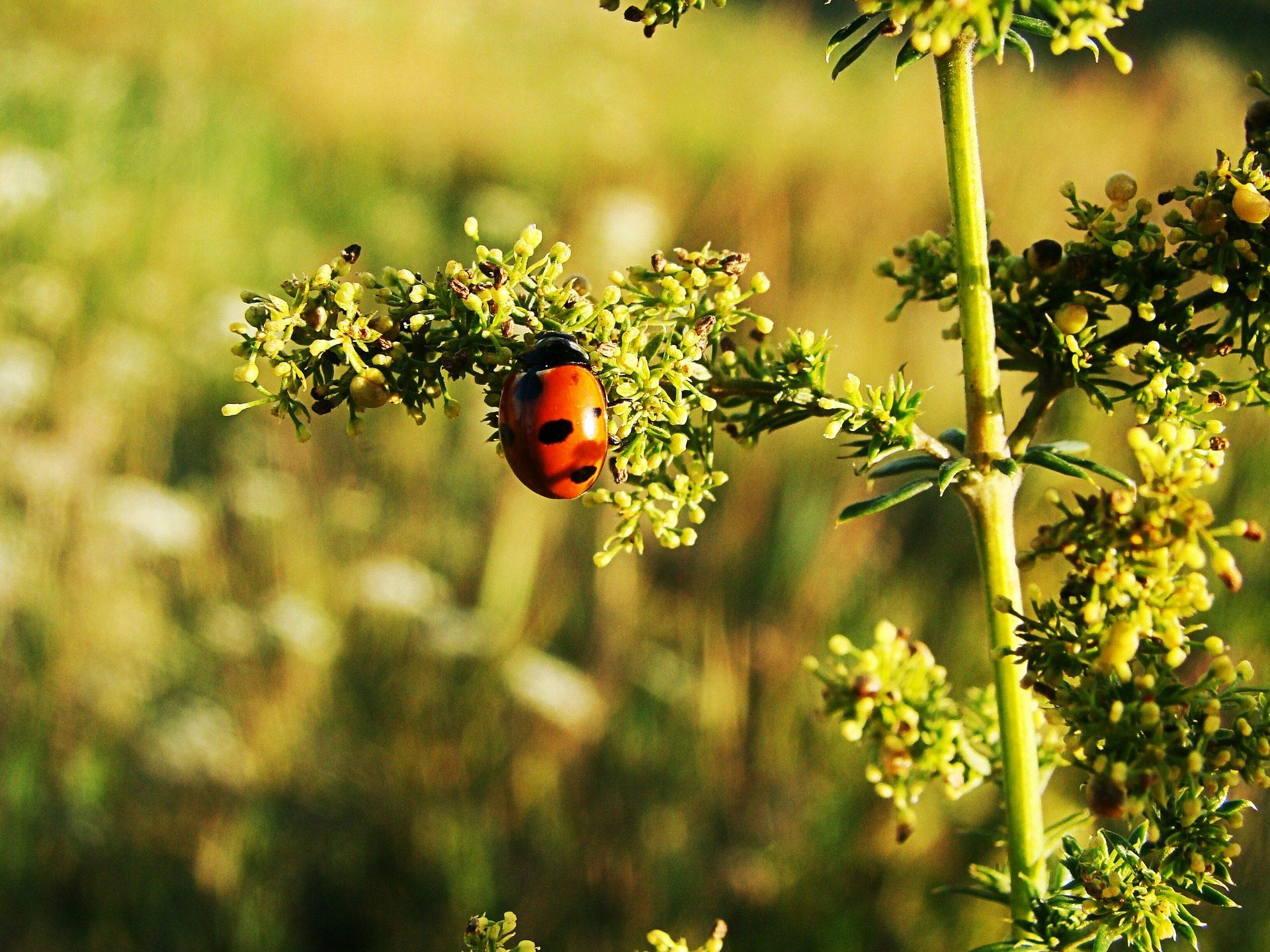 地面层, 瓢虫, 昆虫, 红色, marcas - 高清壁纸 - 教授-falken.com