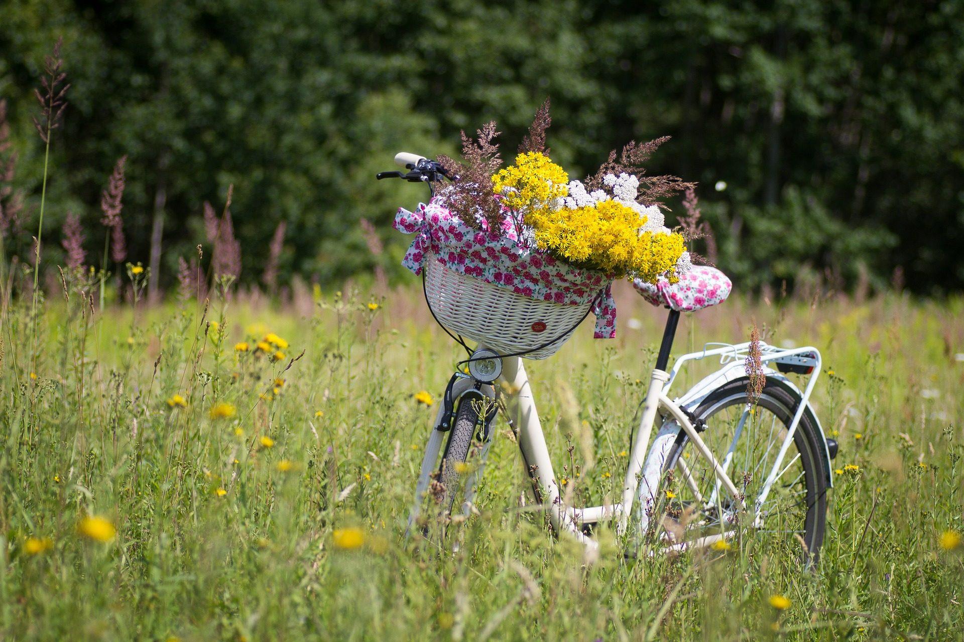 велосипед, путь, Корзина, Цветы, поле, ПРАДО - Обои HD - Профессор falken.com