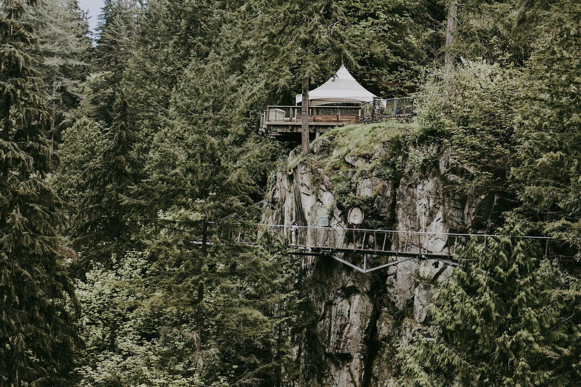 лес, деревья, точка зрения, прохождение, мост, Высота - Обои HD - Профессор falken.com