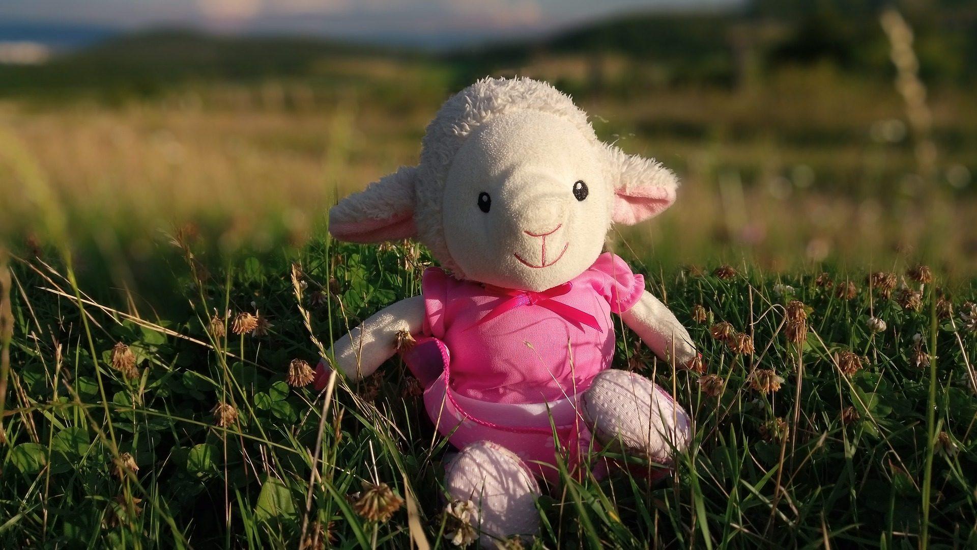 campo, PRADO, pecore, Orsacchiotto, muñeco, erba - Sfondi HD - Professor-falken.com