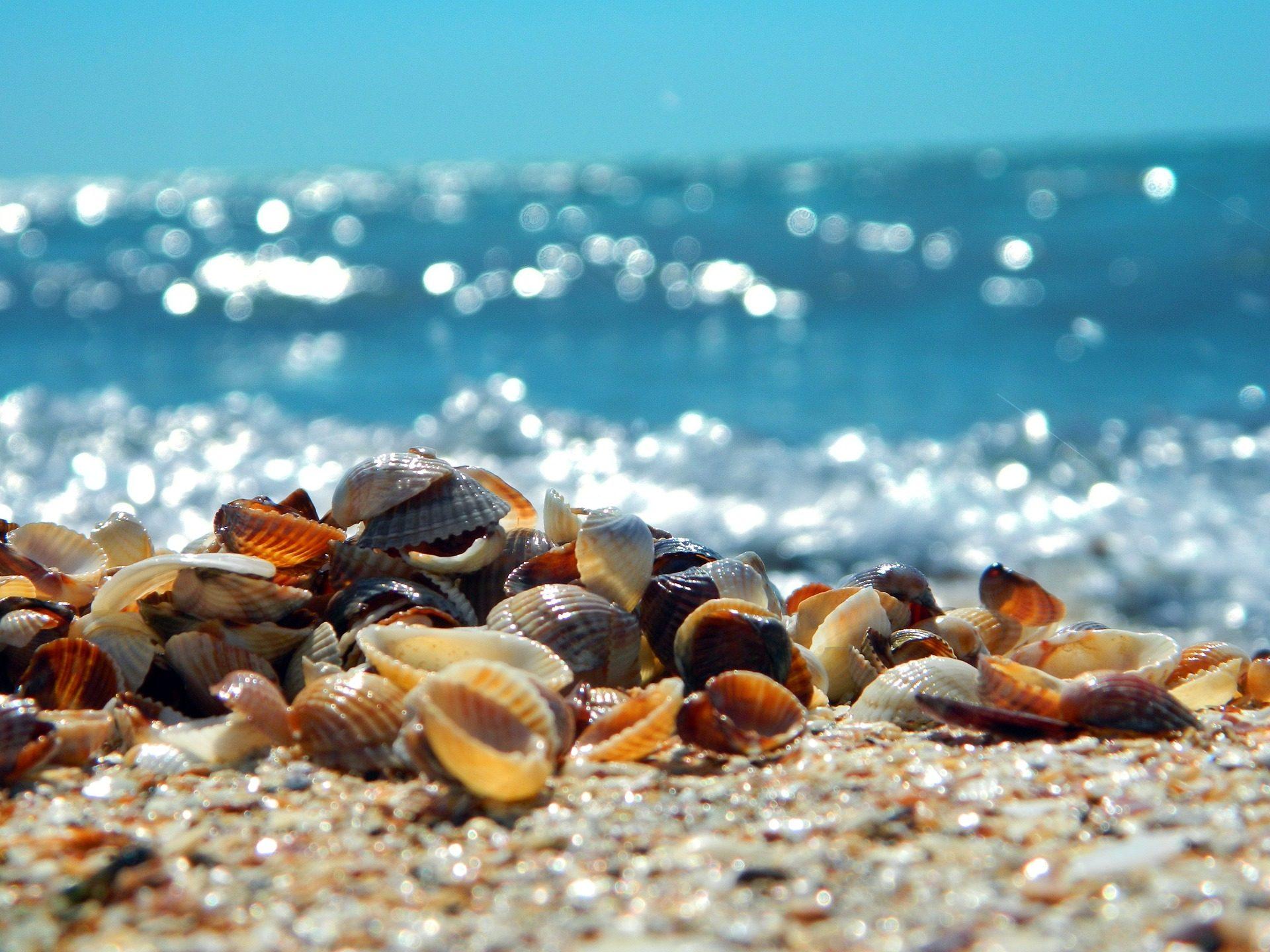シェル, 海の貝殻, アサリ, ビーチ, 海, 砂 - HD の壁紙 - 教授-falken.com