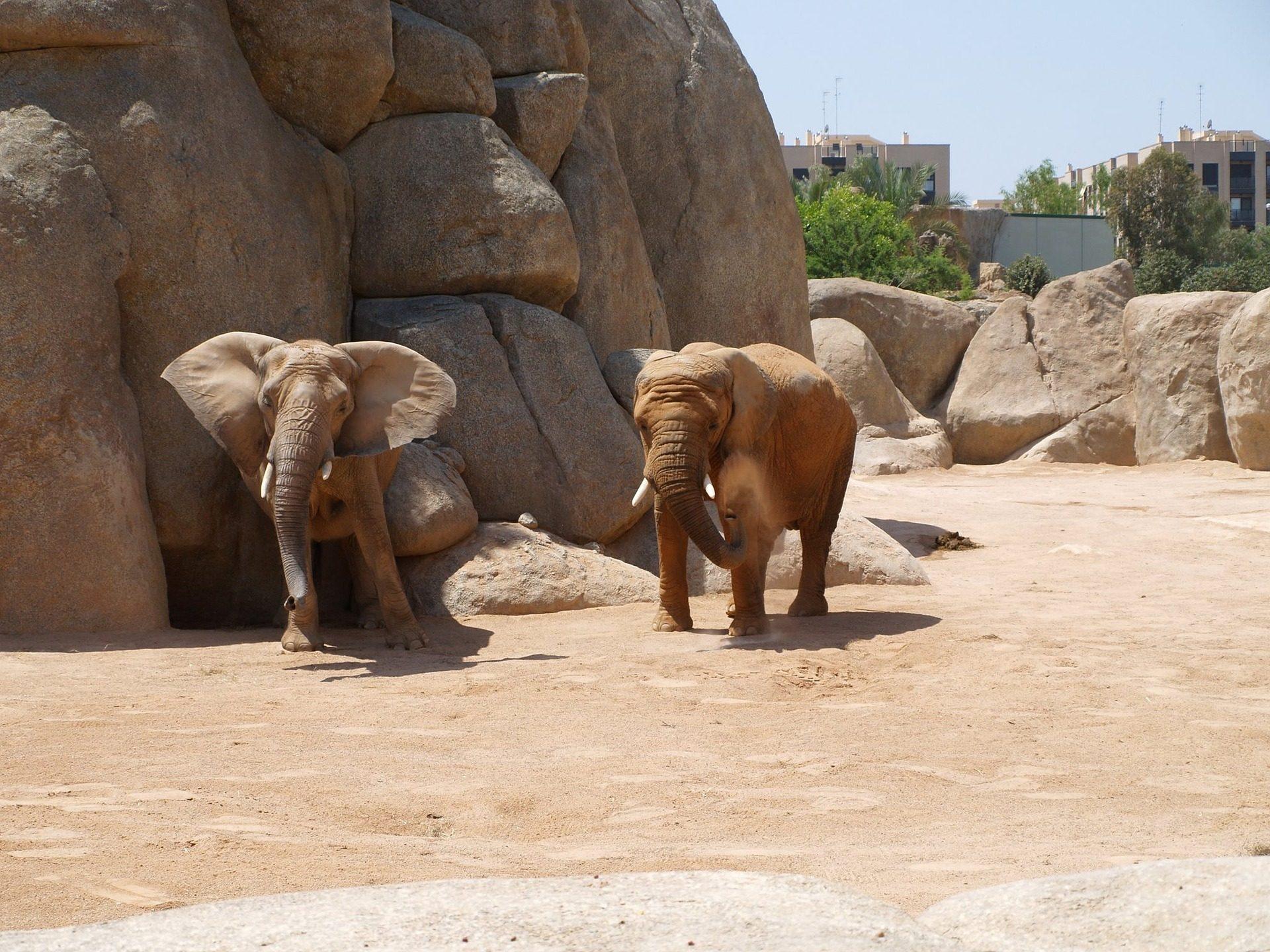 elefantes, colmillos, paquidermos, piedras, zoo - Fondos de Pantalla HD - professor-falken.com
