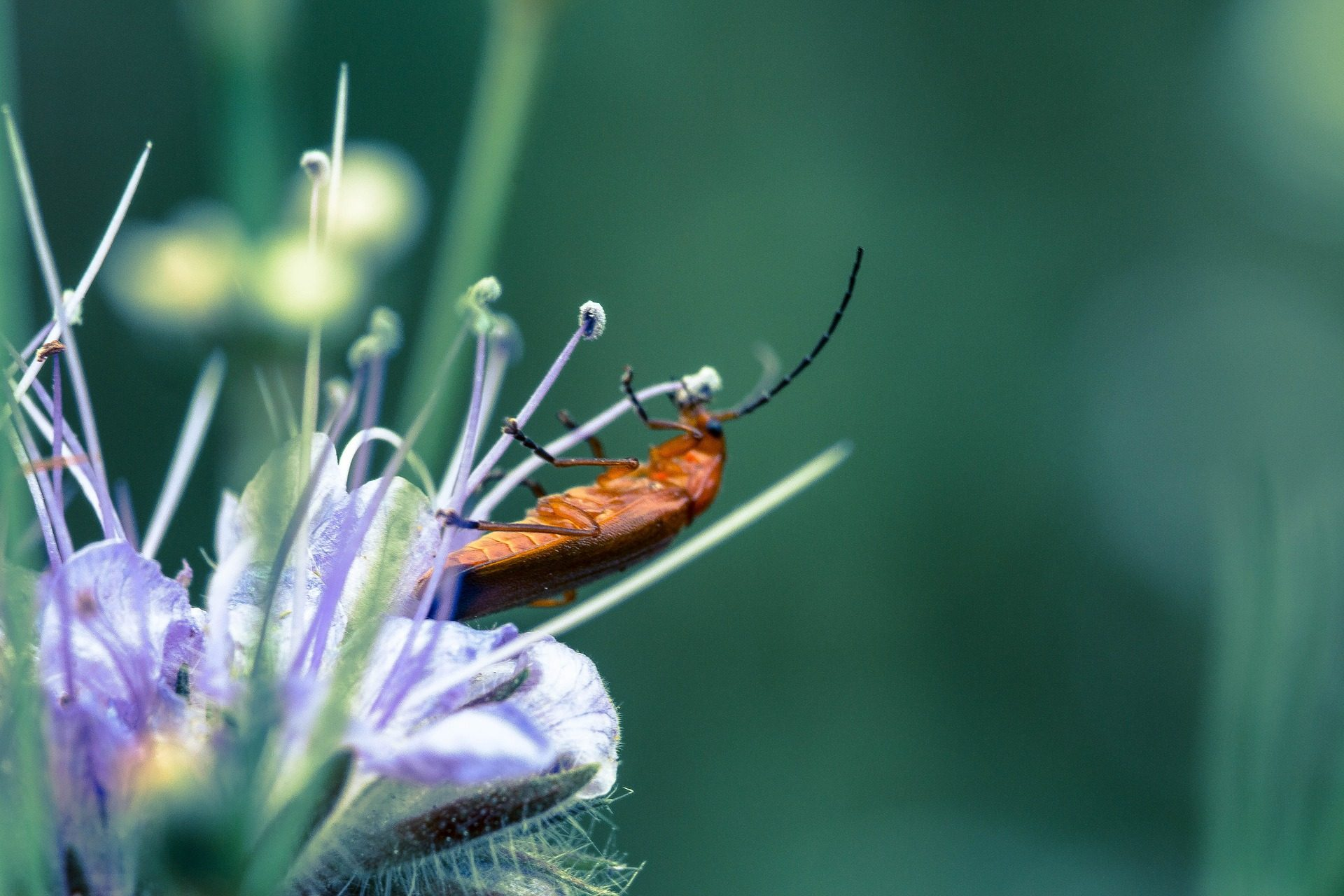 Beetle, insecte, bug, fleur, étamines, sur - Fonds d'écran HD - Professor-falken.com