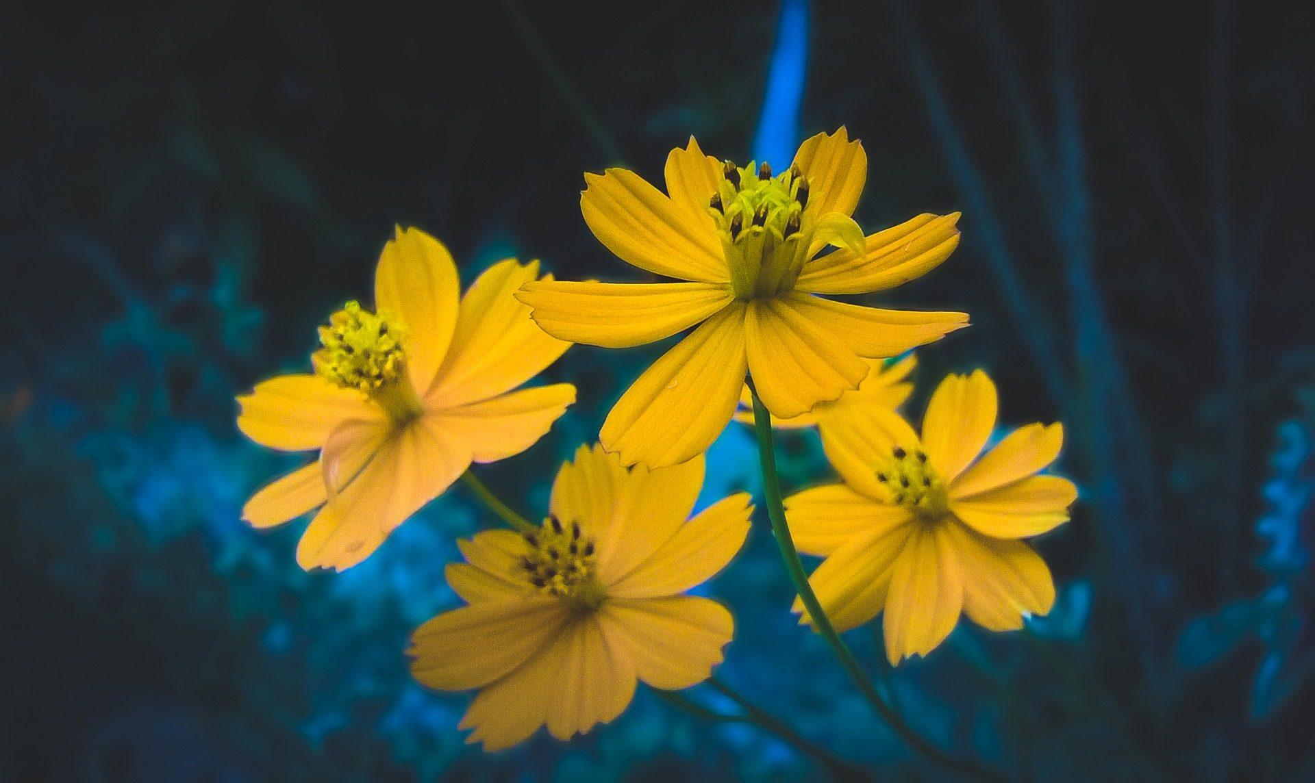 फूल, पंखुड़ियों, पीले, पुंकेसर, रंग - HD वॉलपेपर - प्रोफेसर-falken.com